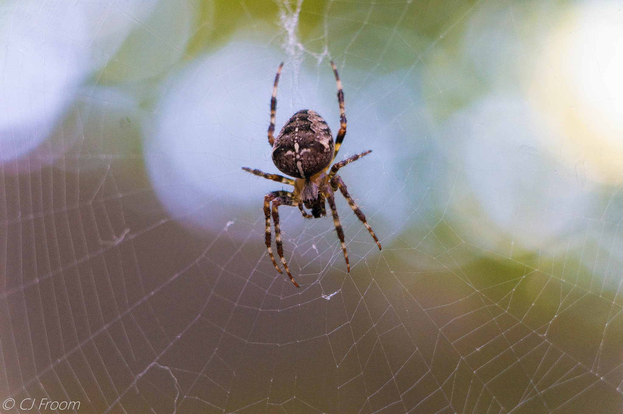 Isty Bitsy Spider 3 by Cj Froom