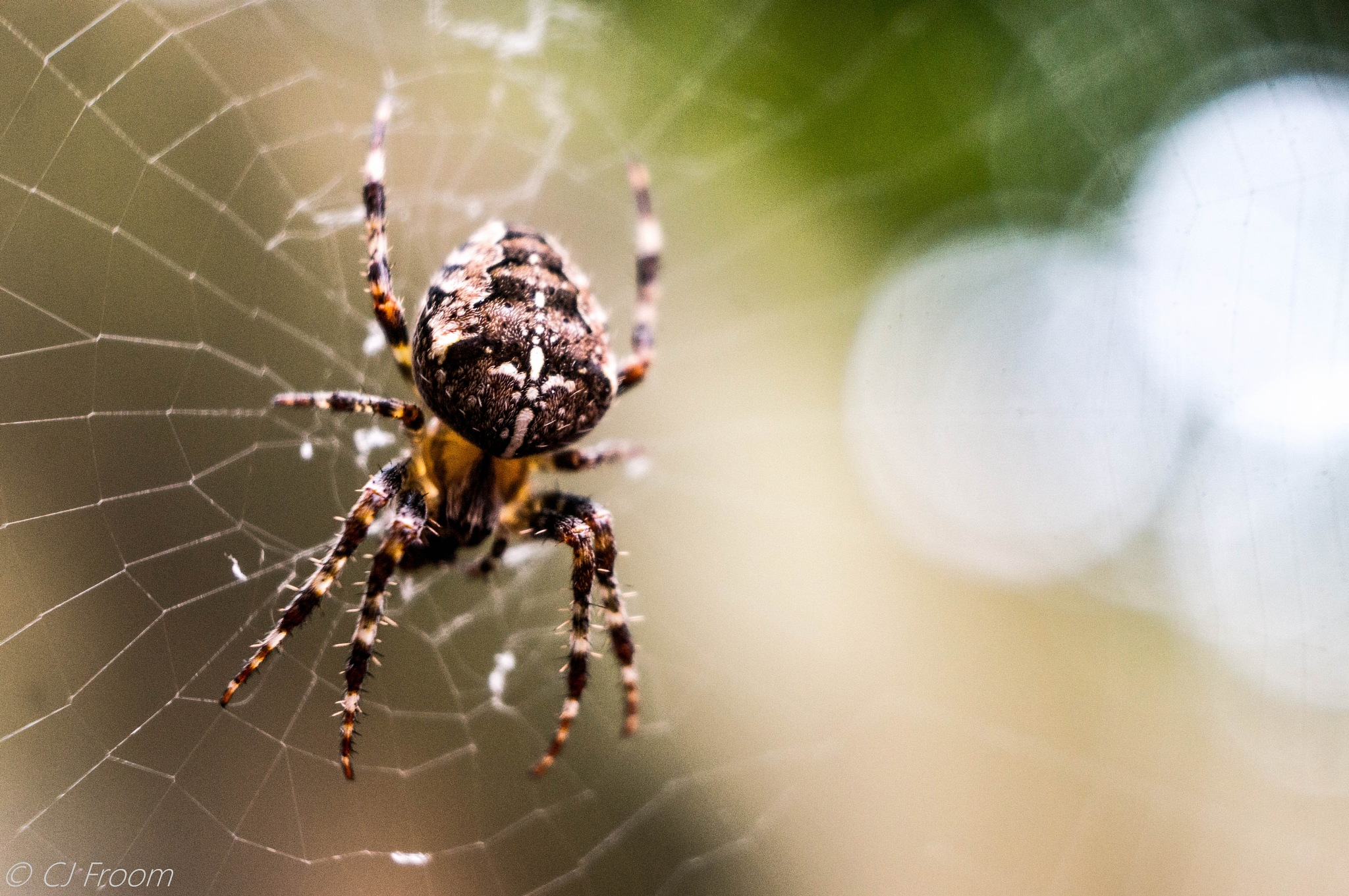 Playing with Angles and a Spider.... by Cj Froom