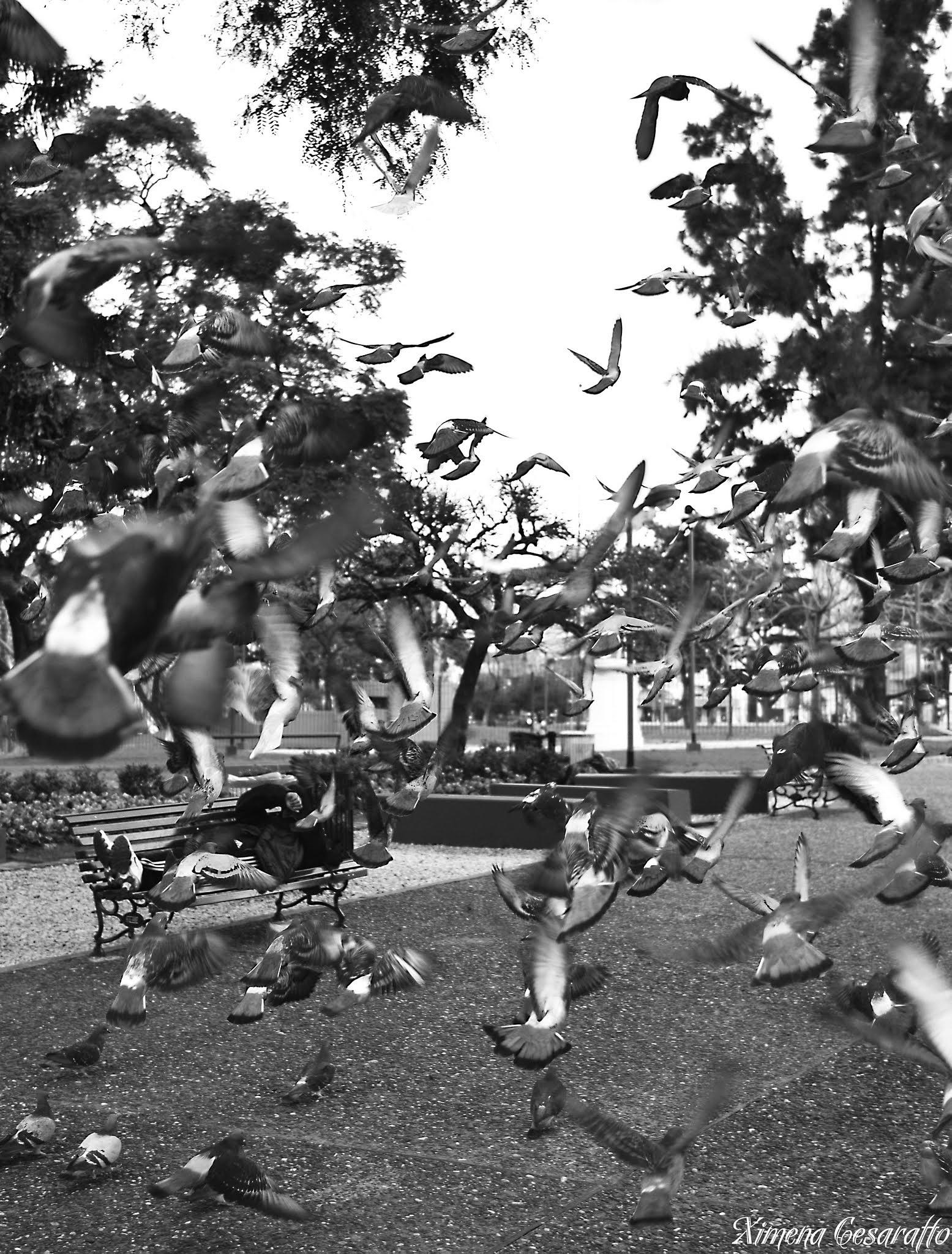 Birds by Xime Cesaratto Errea