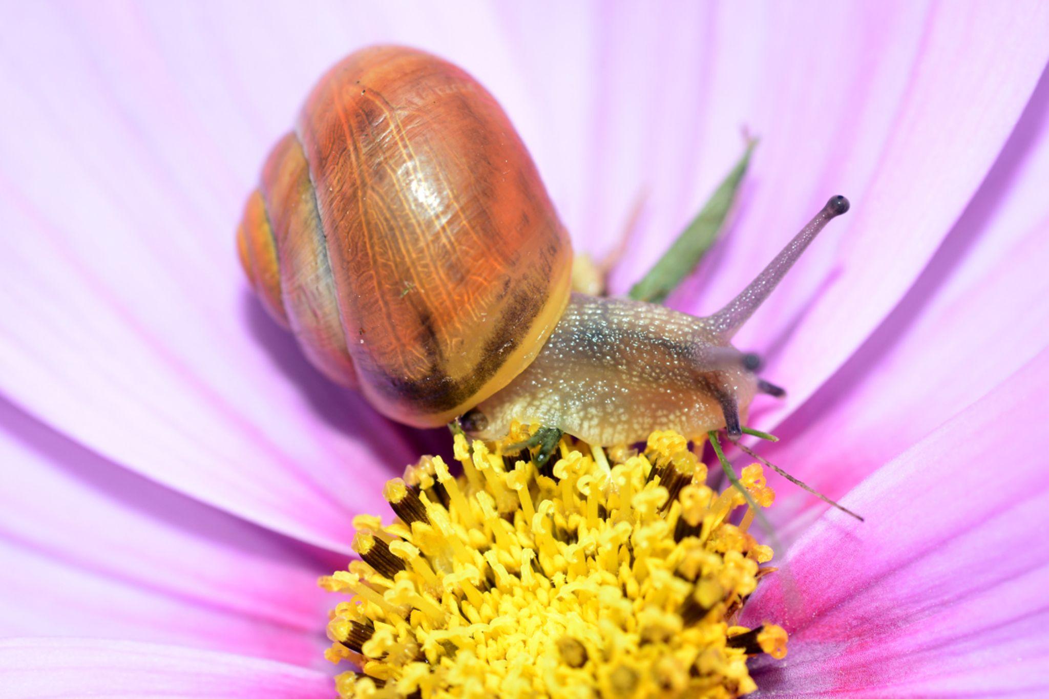 Snail by tommytechno