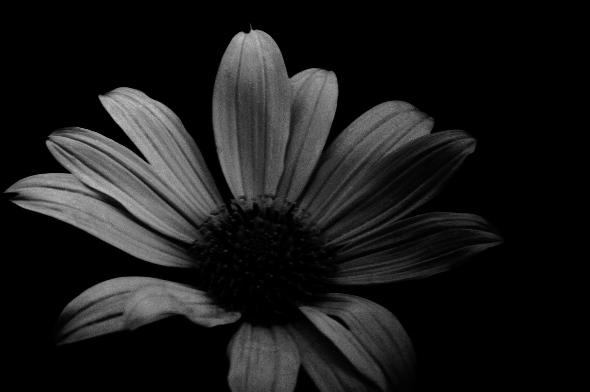 flor em P&W by Aurelio Fabian