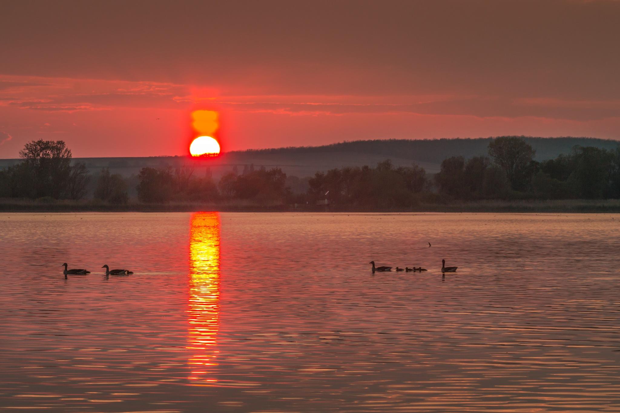 Beautiful sunset on Kis-balaton by VojcyPhoto