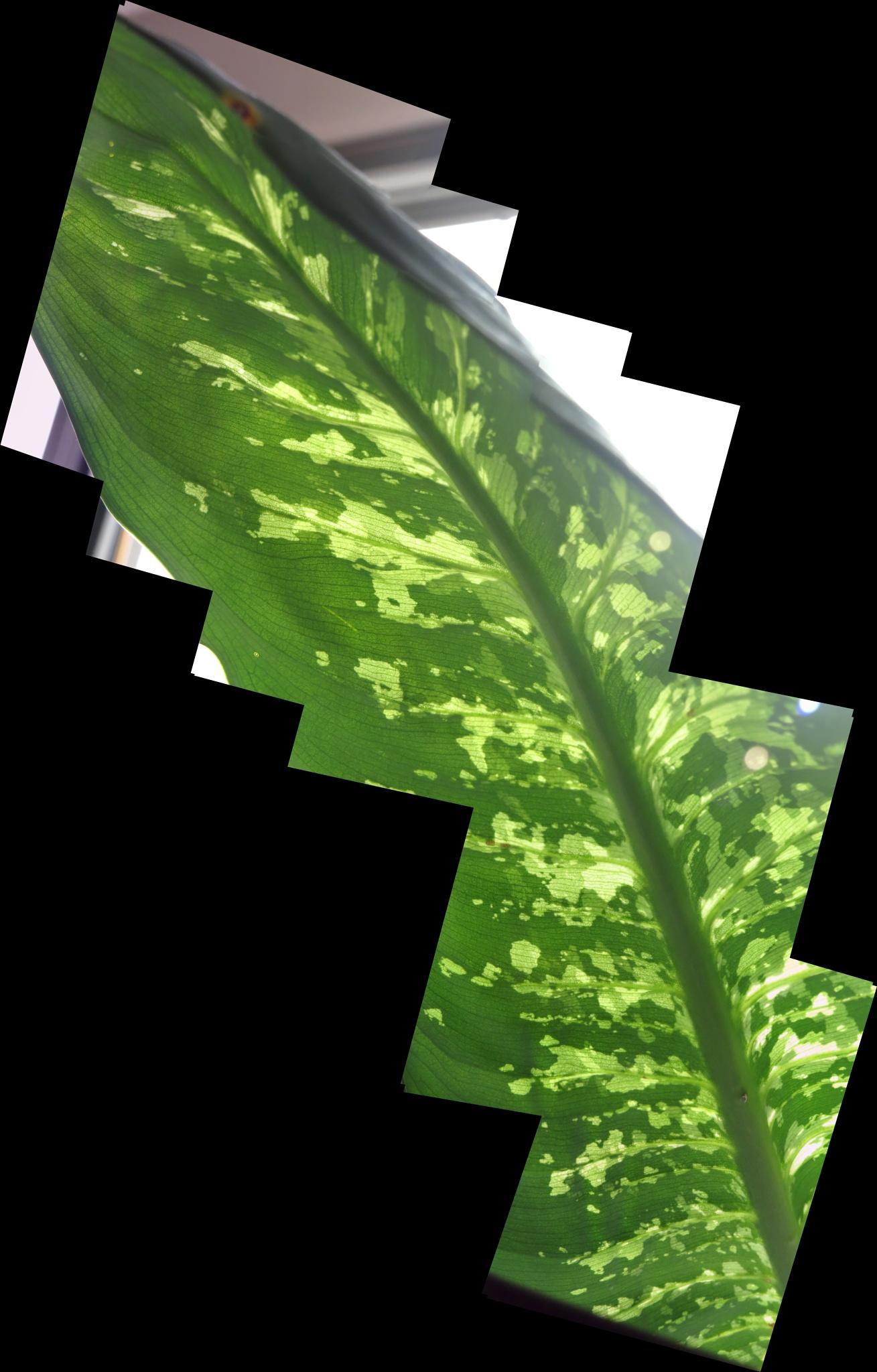 Photo in Abstract #leaf #dieffenbachia #destrutturata #deconstructed