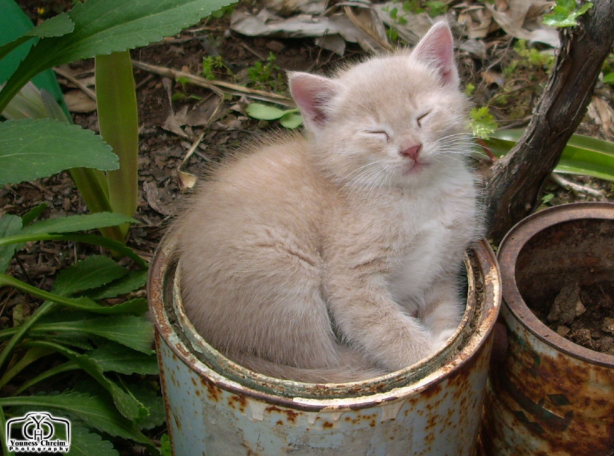 Sleeping kitten by Youness Chreim