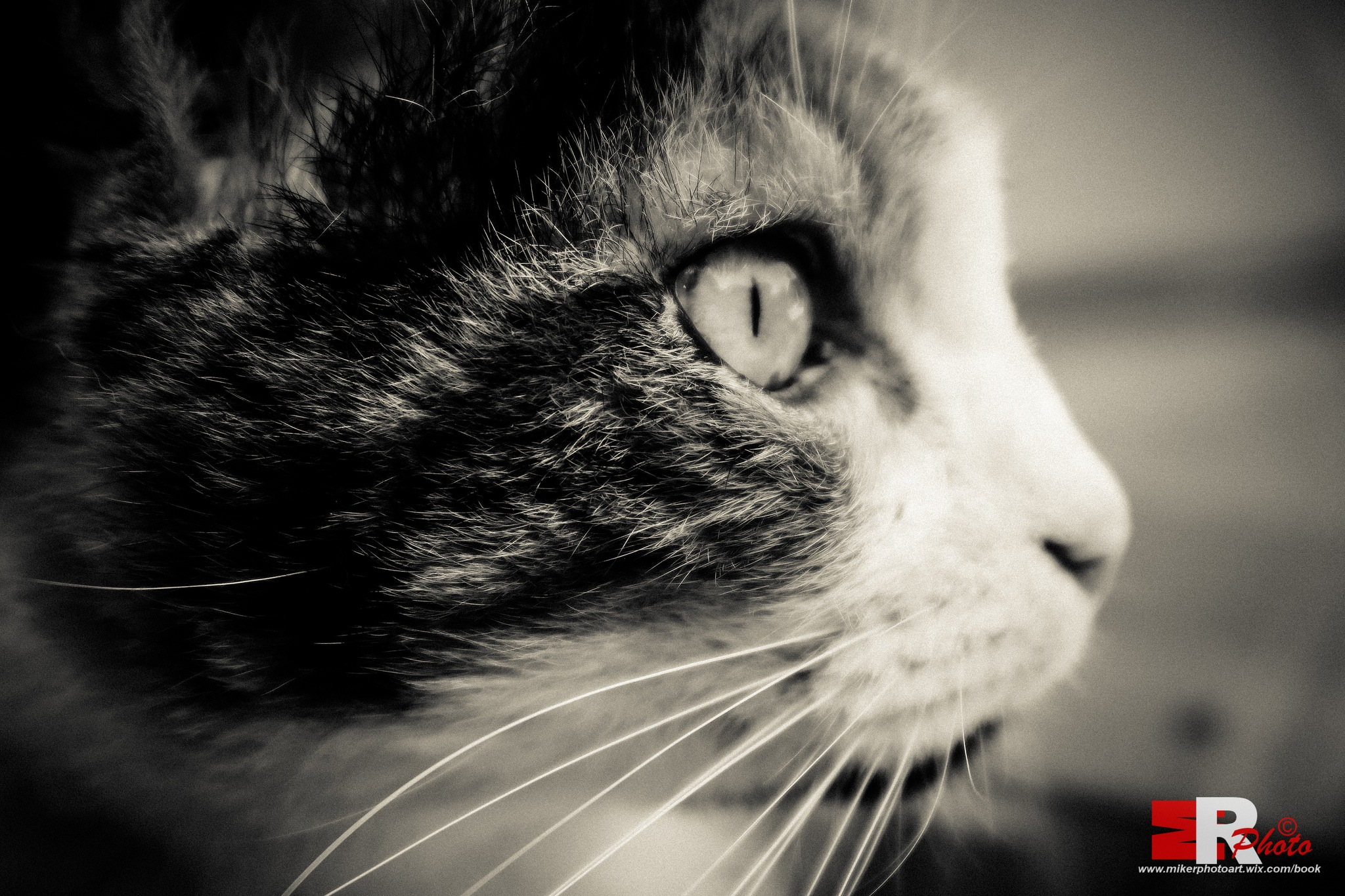 She, the Cat. by Michele Rallo | MR PhotoArt ©