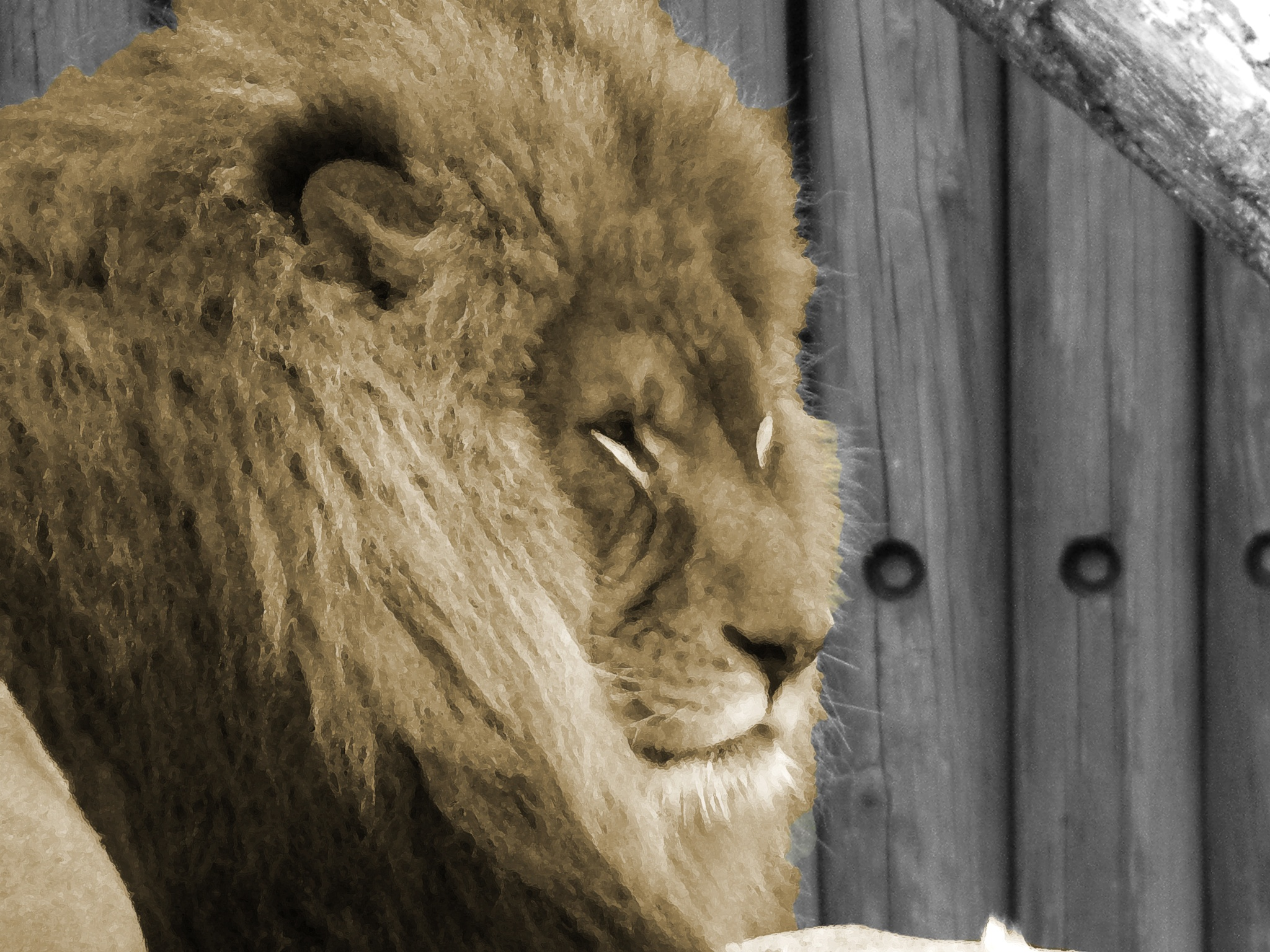 King in Sepia by Phillip W. Strunk