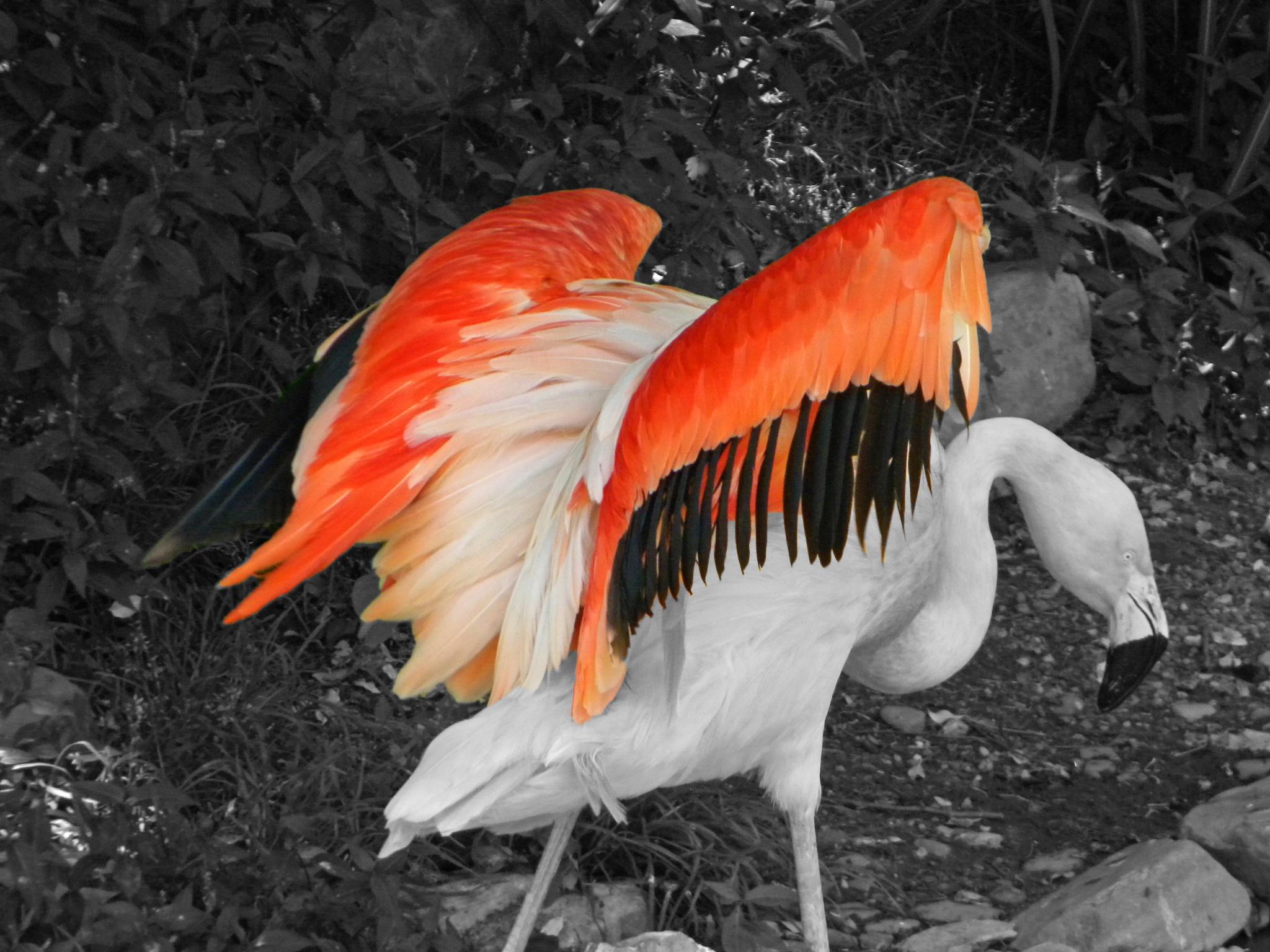 Wings by Phillip W. Strunk