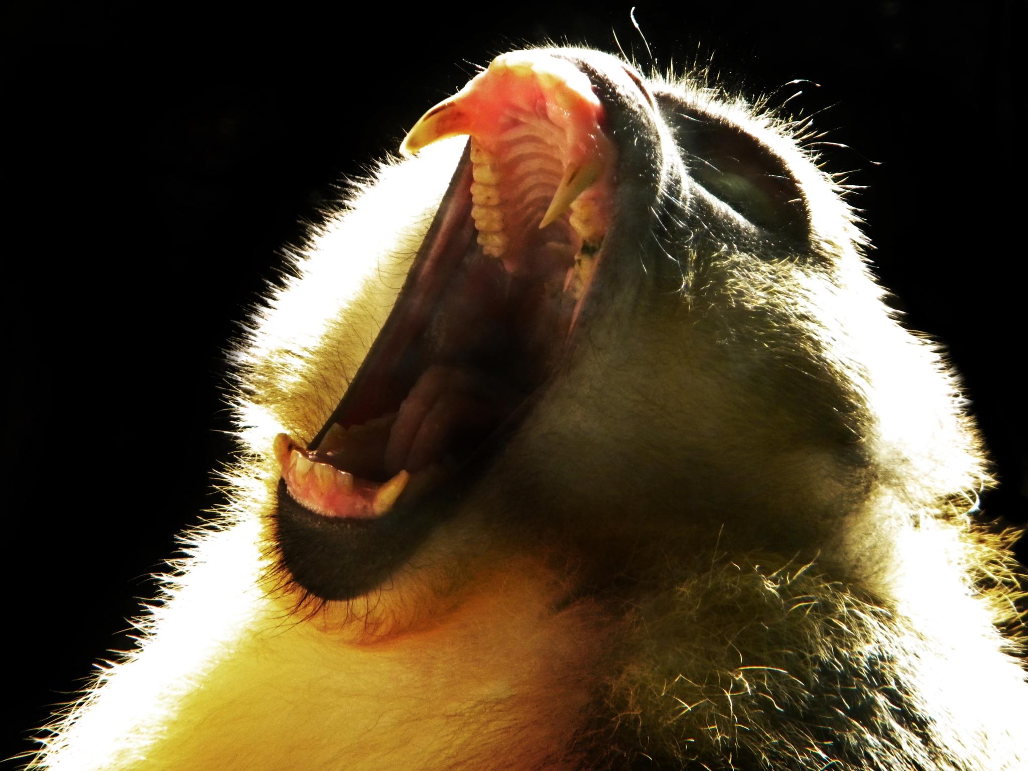 Primal Yawn by Phillip W. Strunk