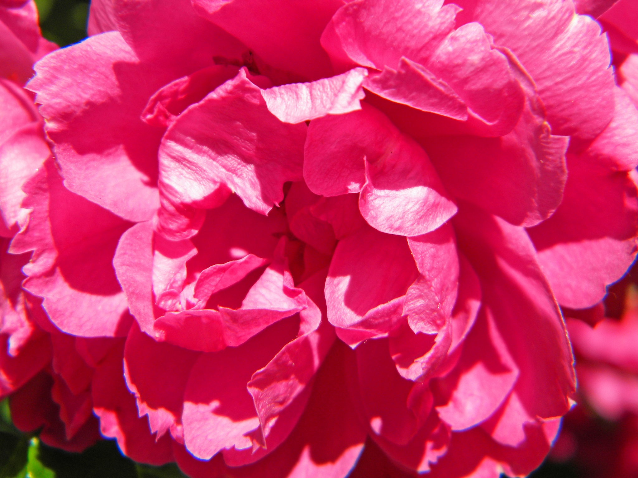 Pretty In Pink by Phillip W. Strunk