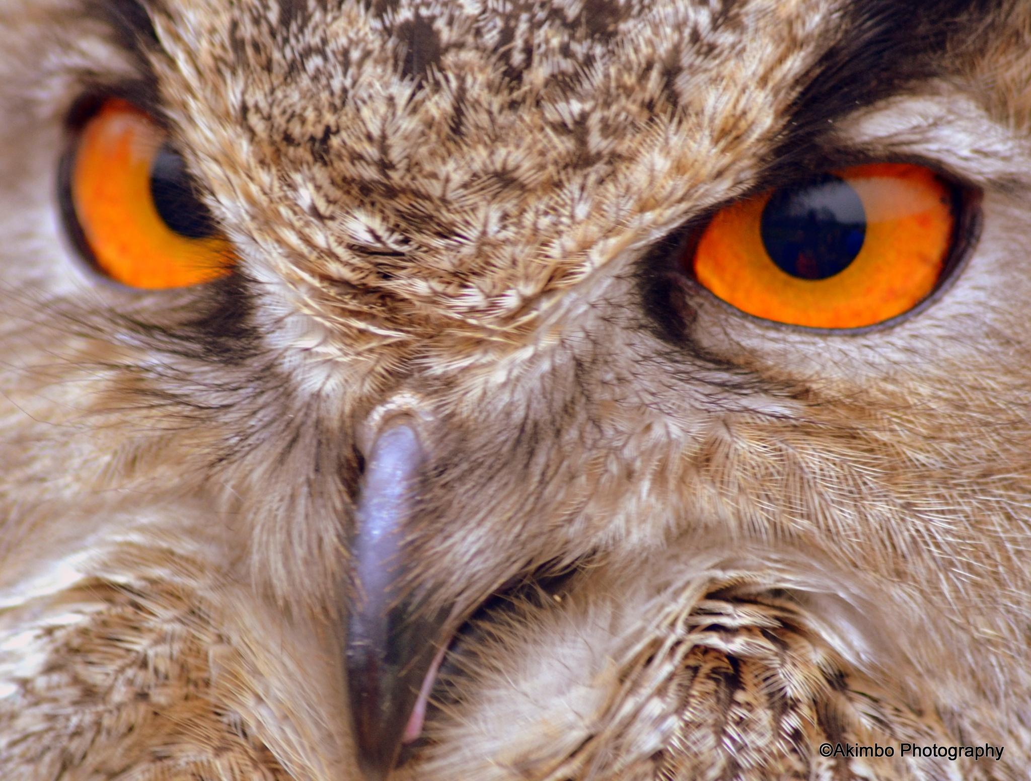 Eyes of a Predator by Rob Clarke