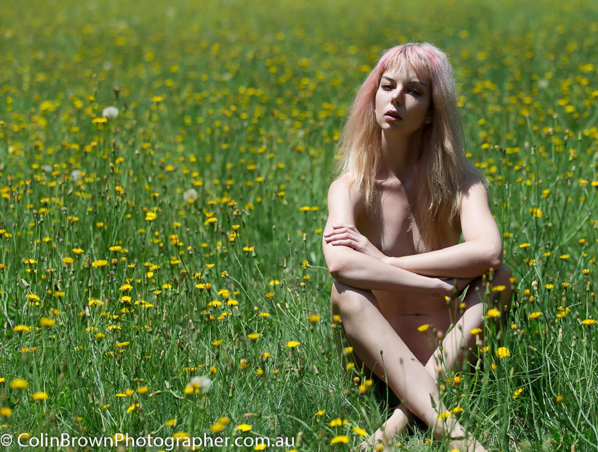 Dandelions in the Dandenongs by ColinBrownPhotographer