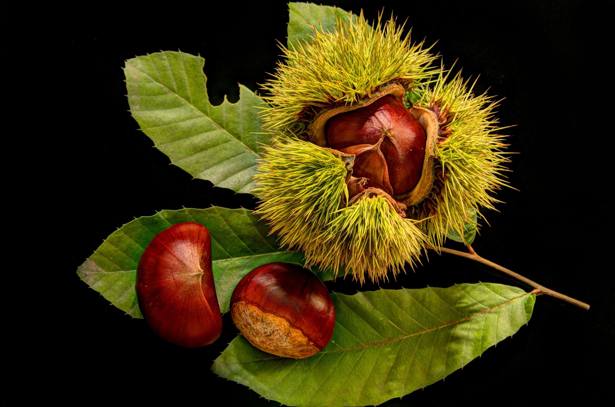 chestnut family by yammy
