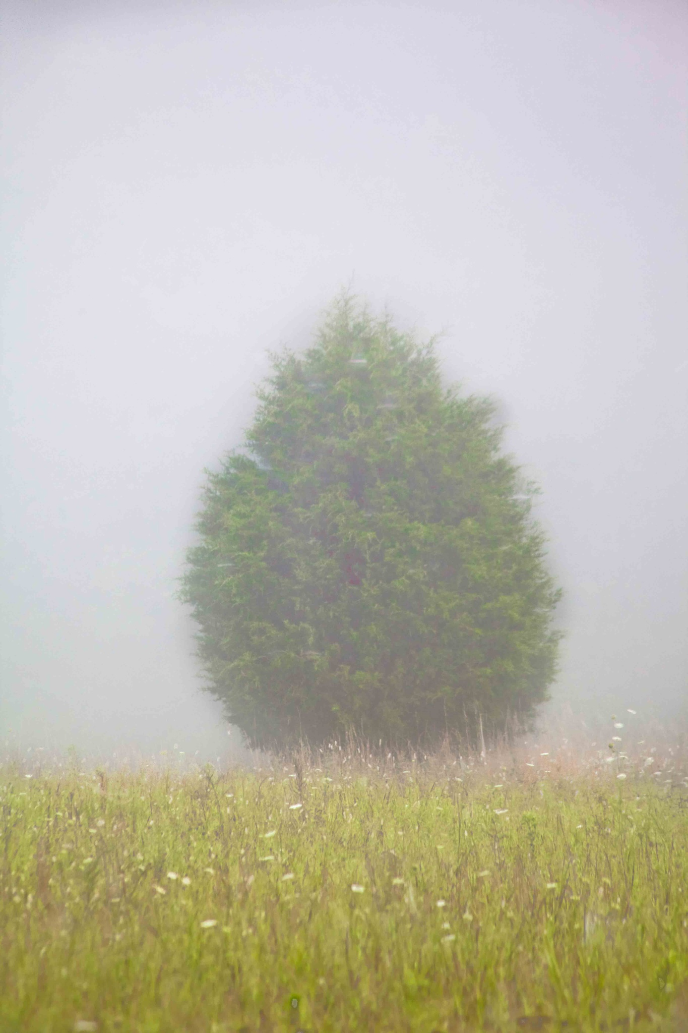 Foggy Tree by JP Parmley