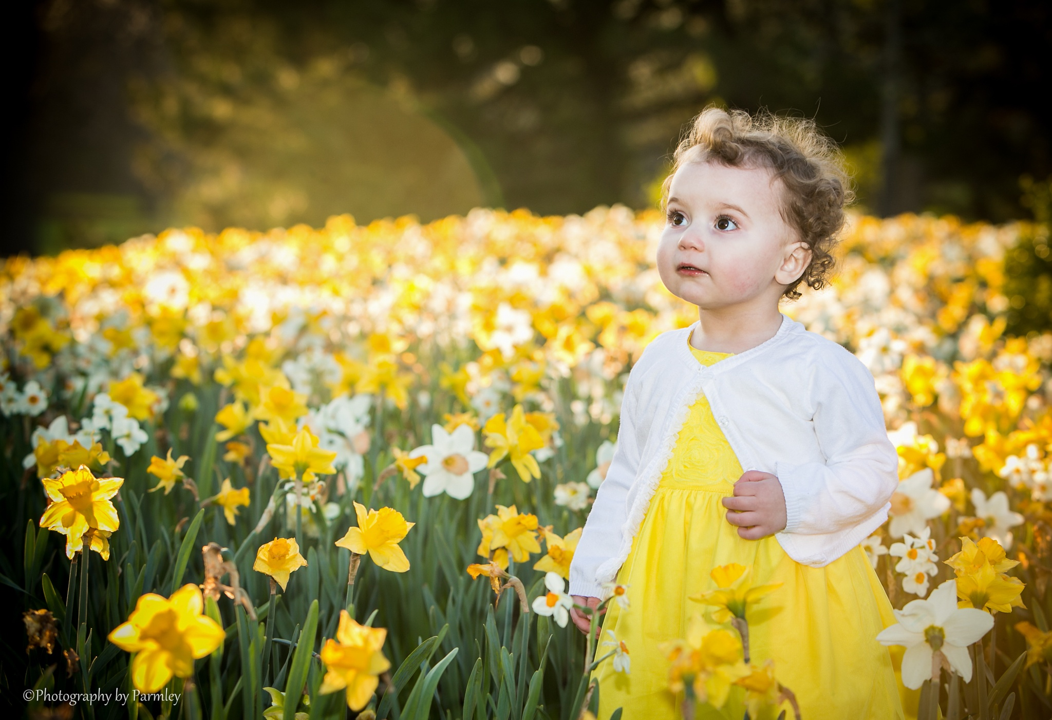 In the Flowers by JP Parmley