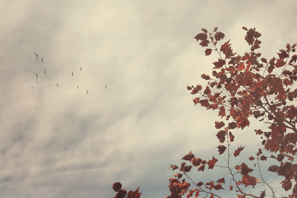 Branches in the sky by Monica