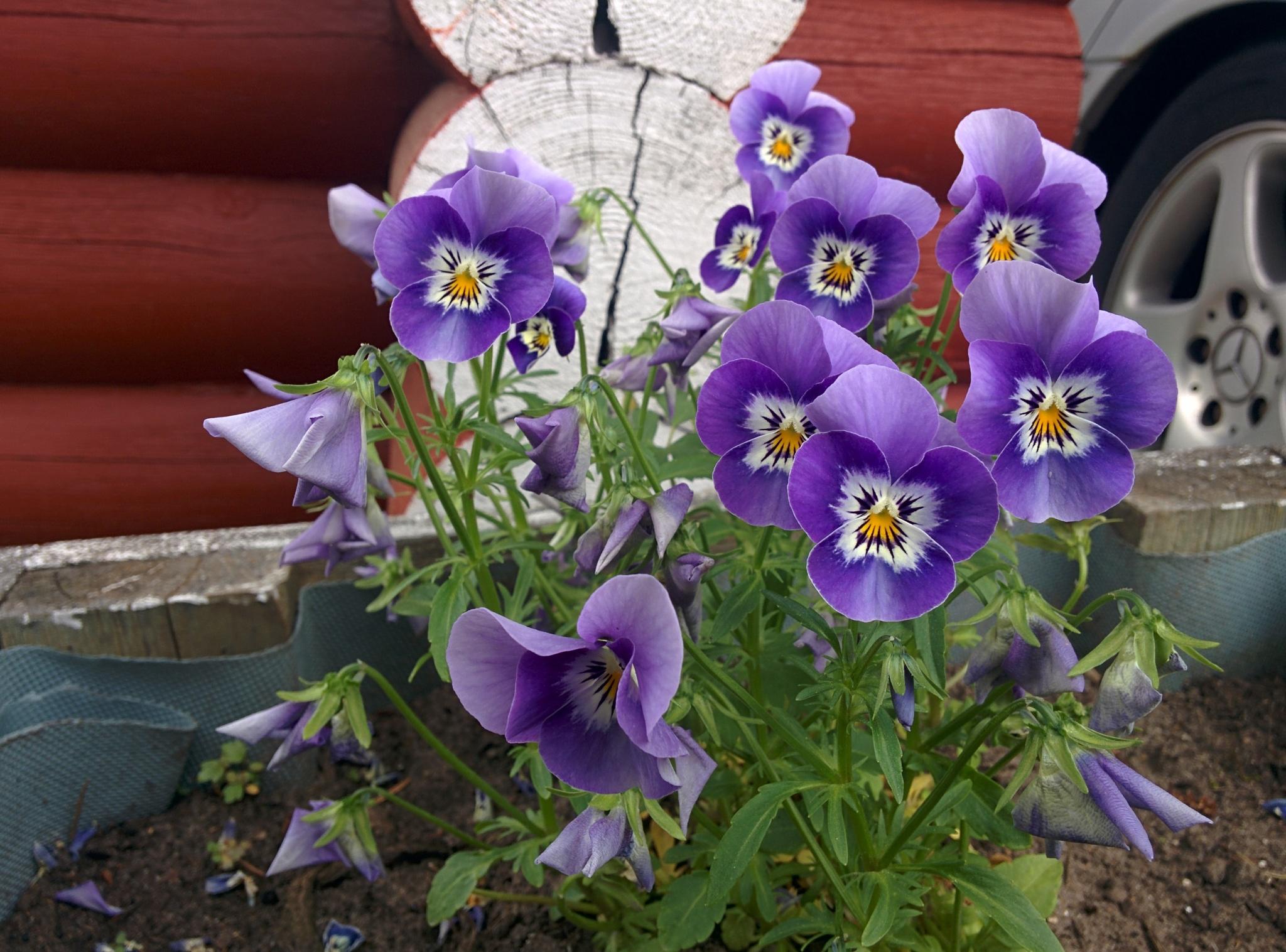 Angry flowers by Mia Teglia