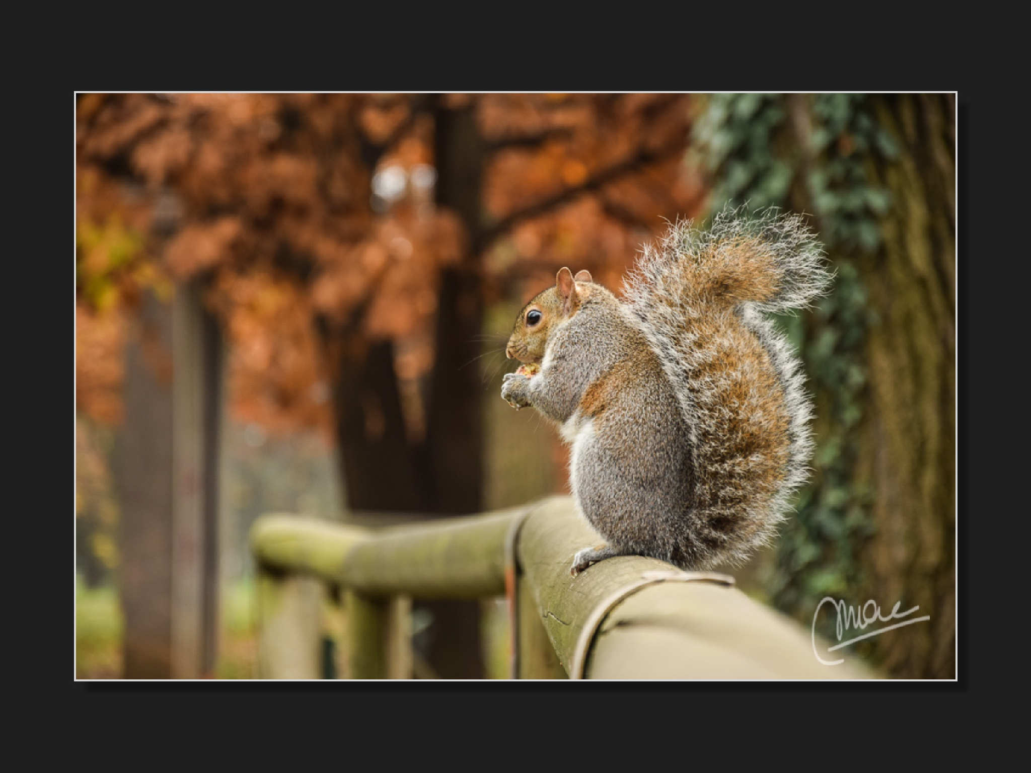 Eating squirrel by Marco Andreazza