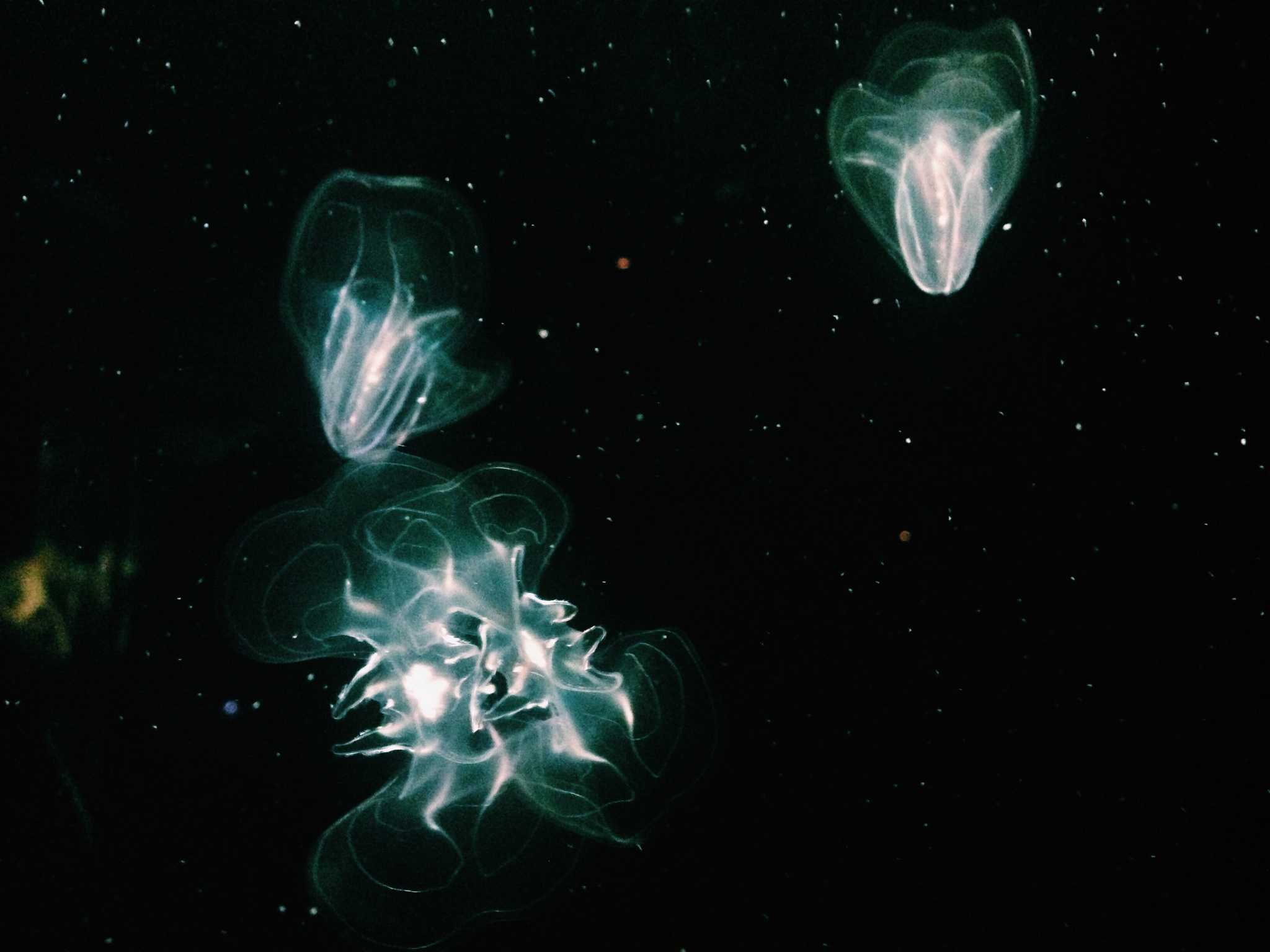 Universe by Anastsiia Kolomoiets