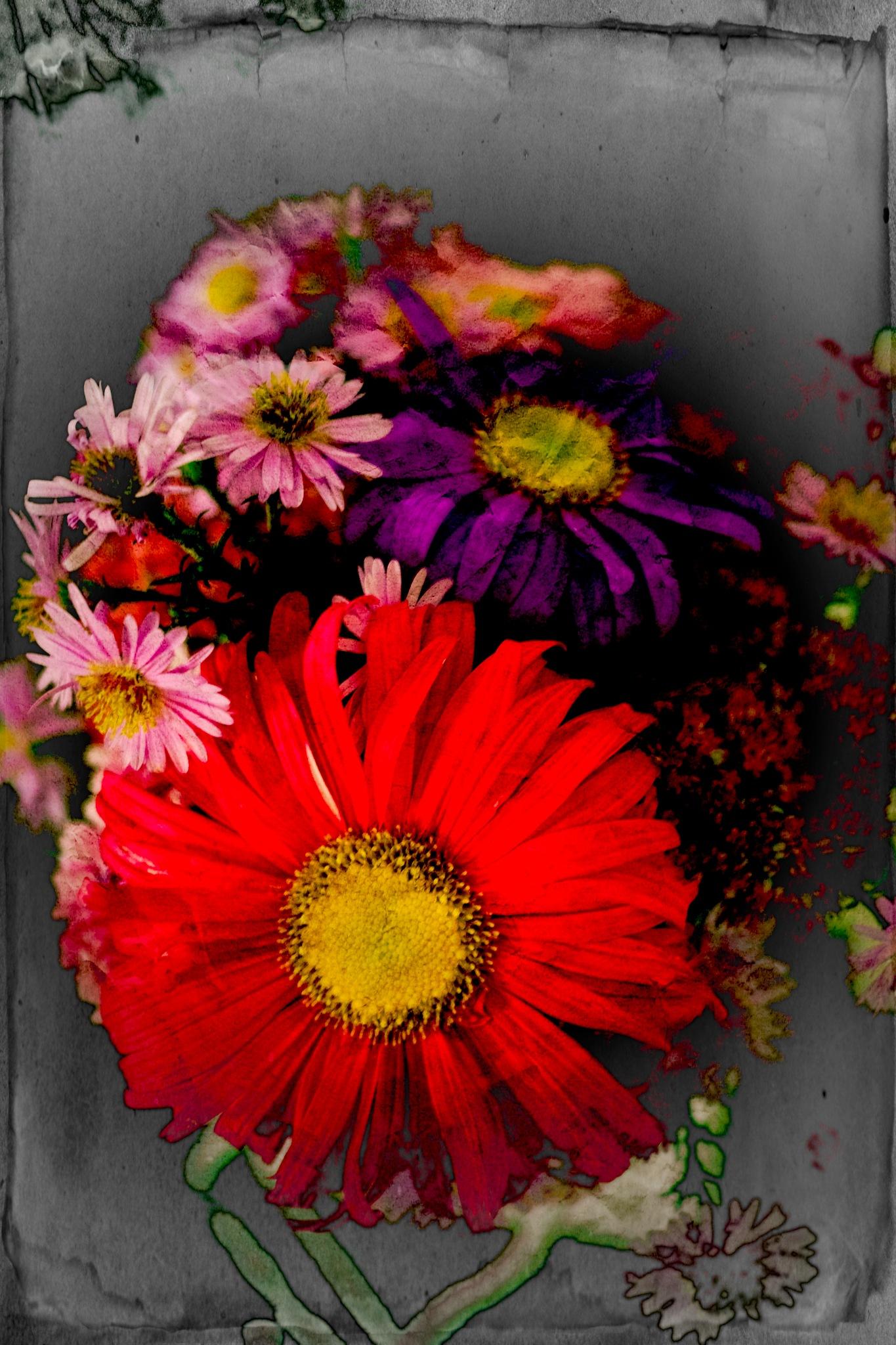 Sunday´s Colors , 25.9.16 by Goran Jorganovich