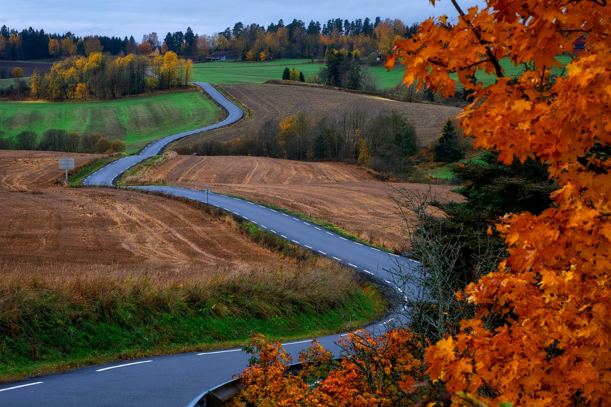 Autumn Road - Kingdom of Norway by Goran Jorganovich