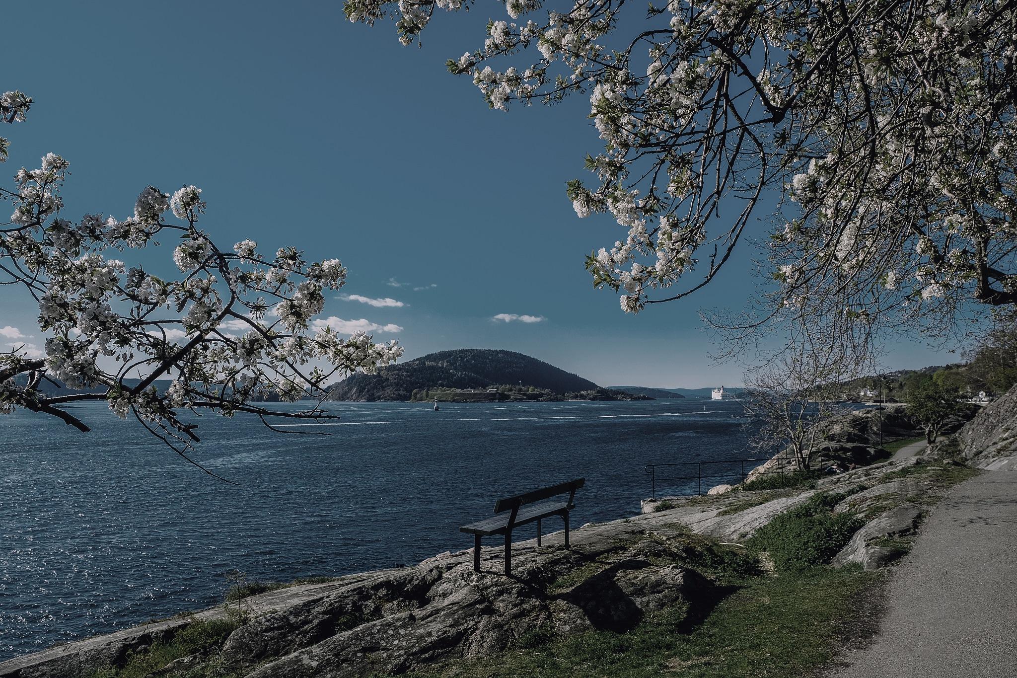 Spring at Oslo fjord by Goran Jorganovich