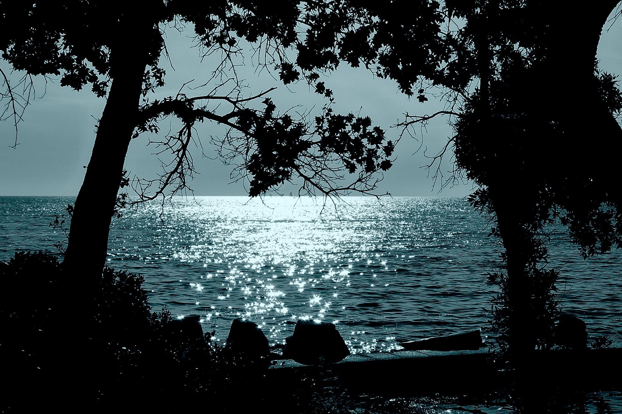 Moonlight , Rovinj -Croatia by Goran Jorganovich