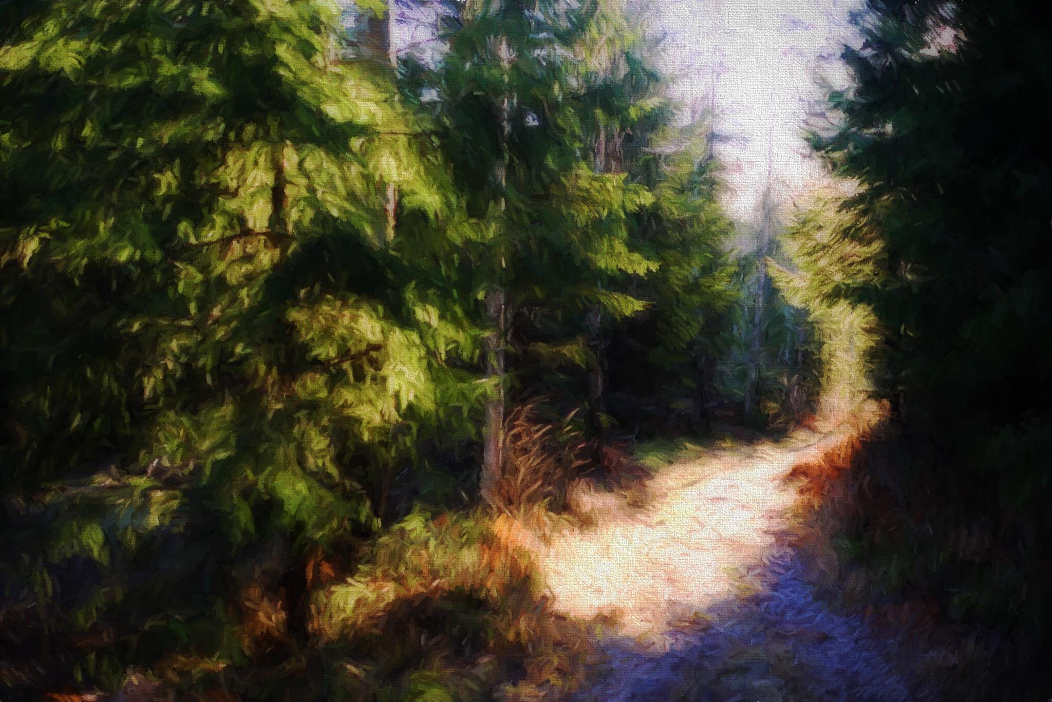 Morning in Norwegian  Forest by Goran Jorganovich