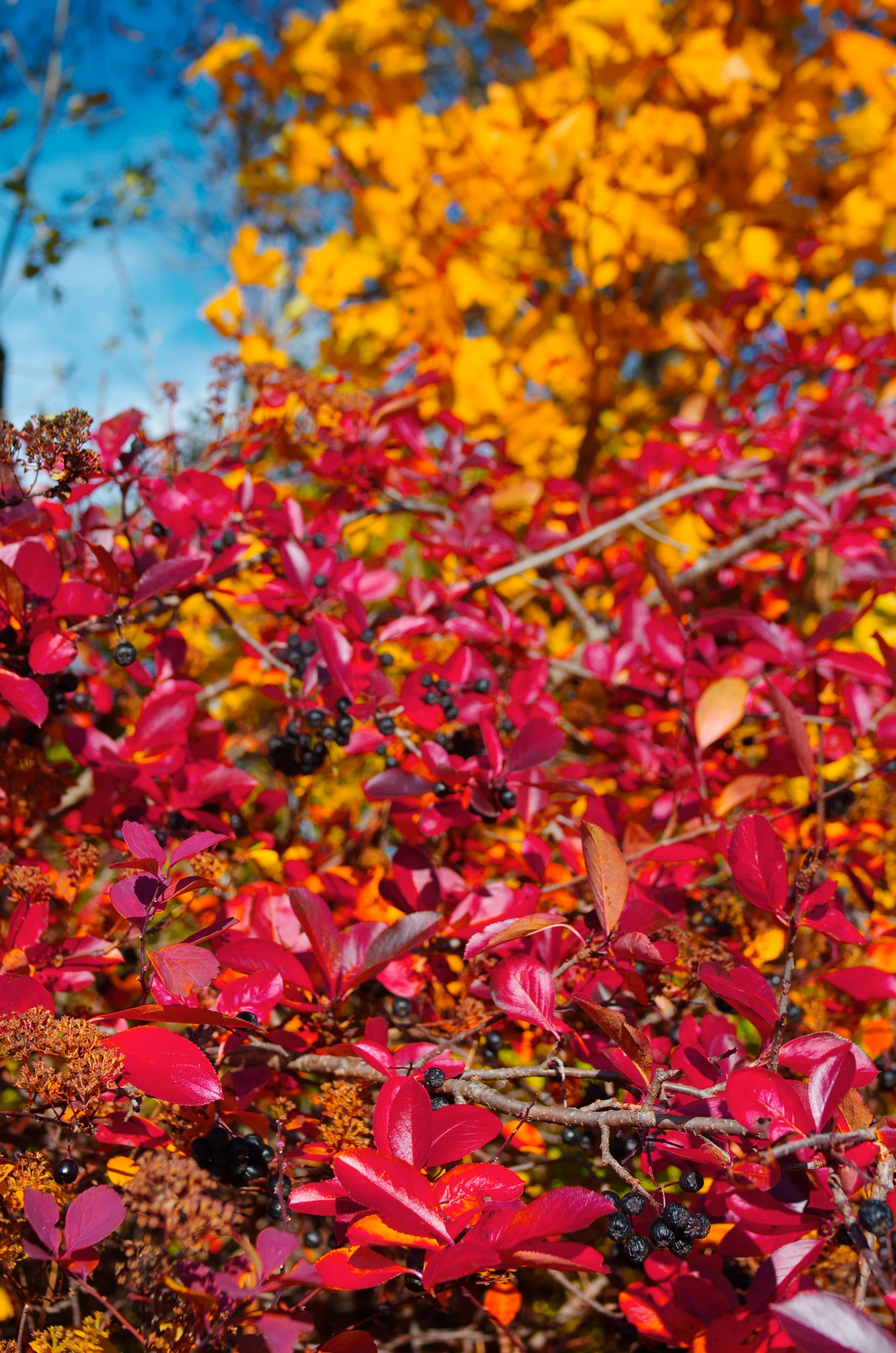 Leaves  by Goran Jorganovich