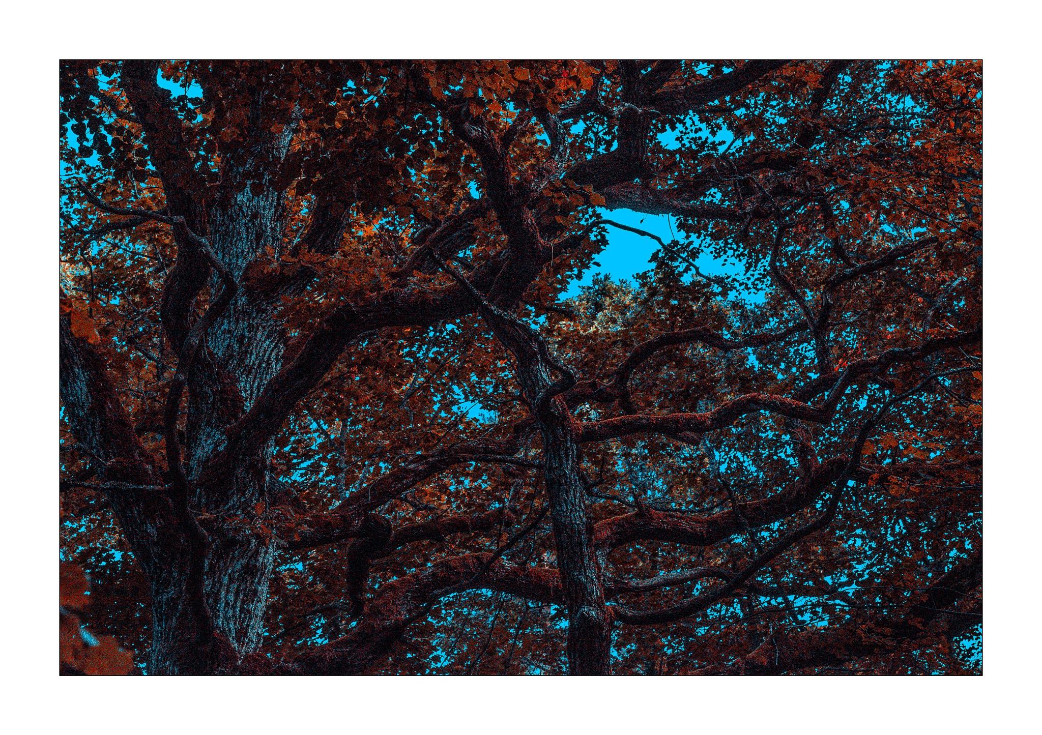OLD WISE TREE by Goran Jorganovich
