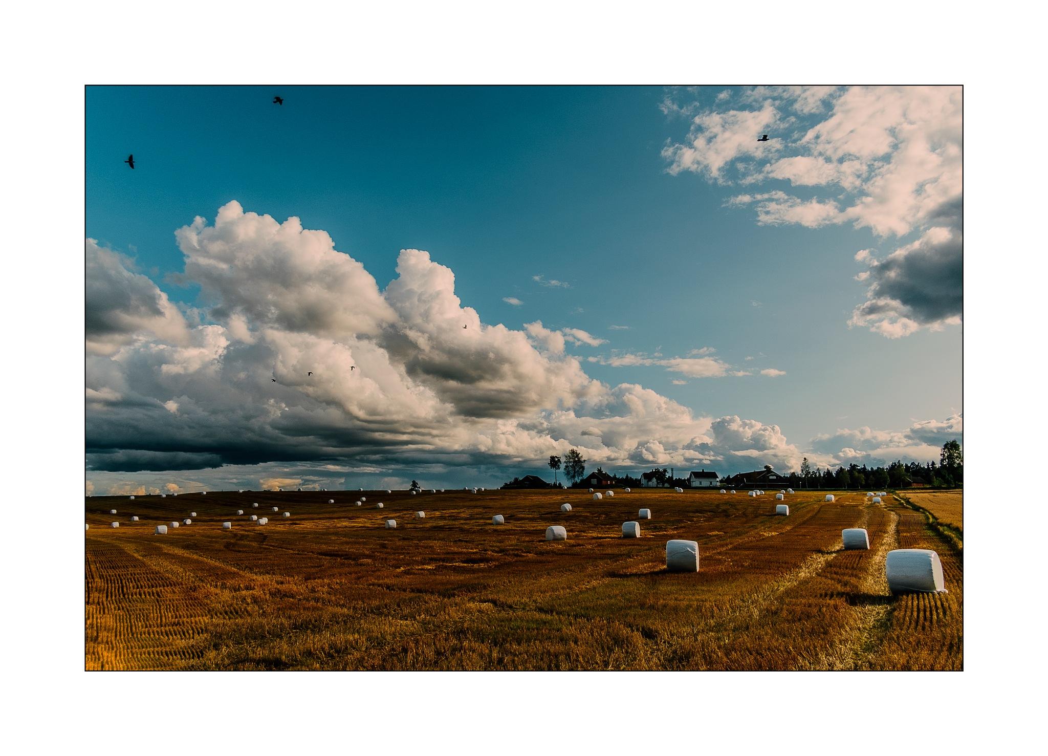 GOLDEN HARVEST IN THE NORTH by Goran Jorganovich