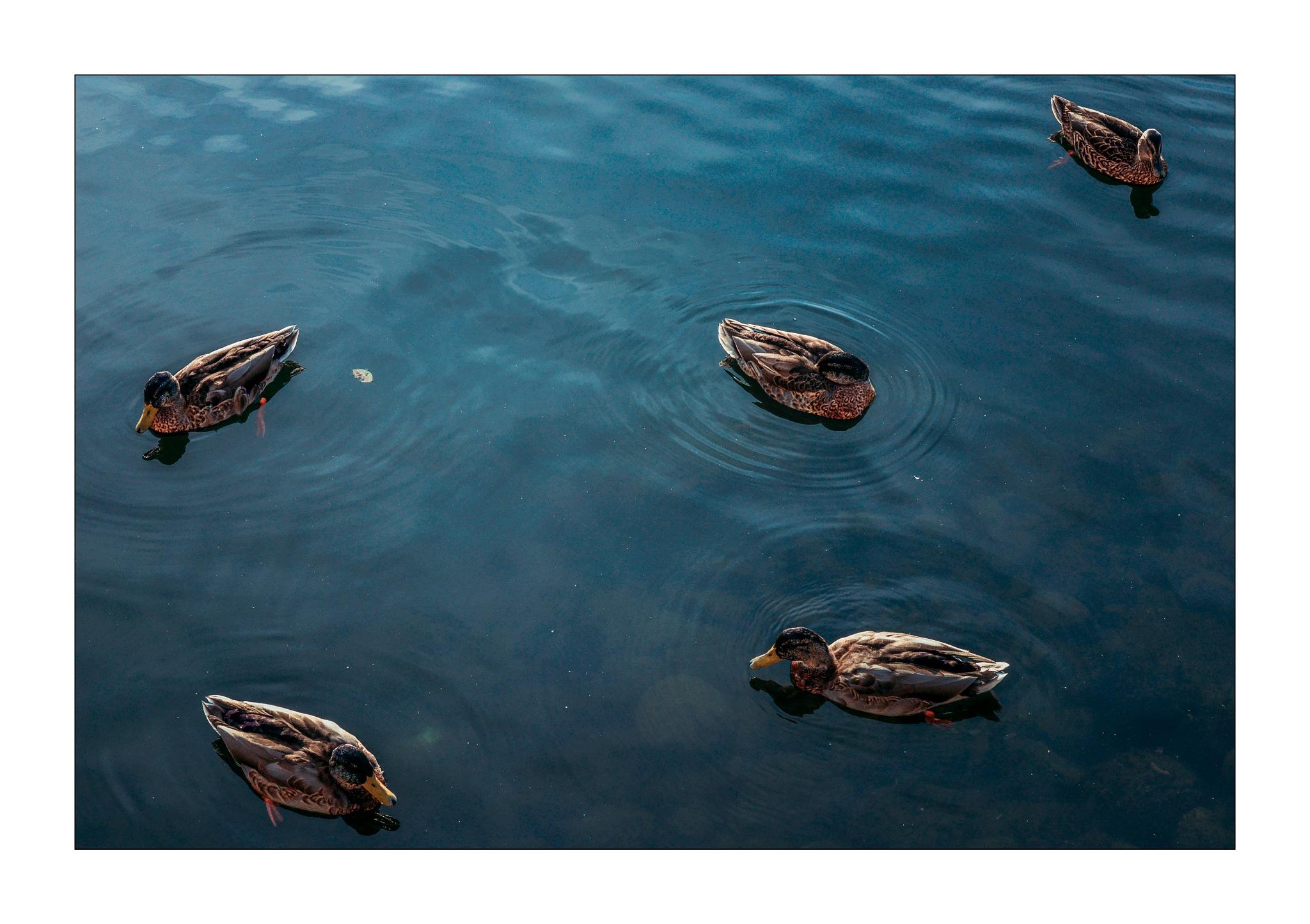 We like to swim by Goran Jorganovich