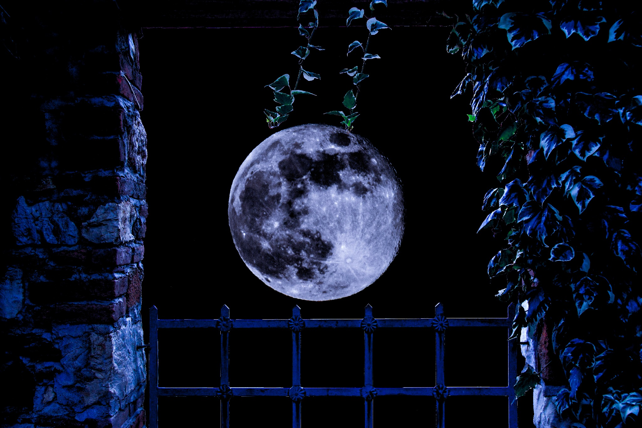 The night with a fool moon over my garden by Goran Jorganovich