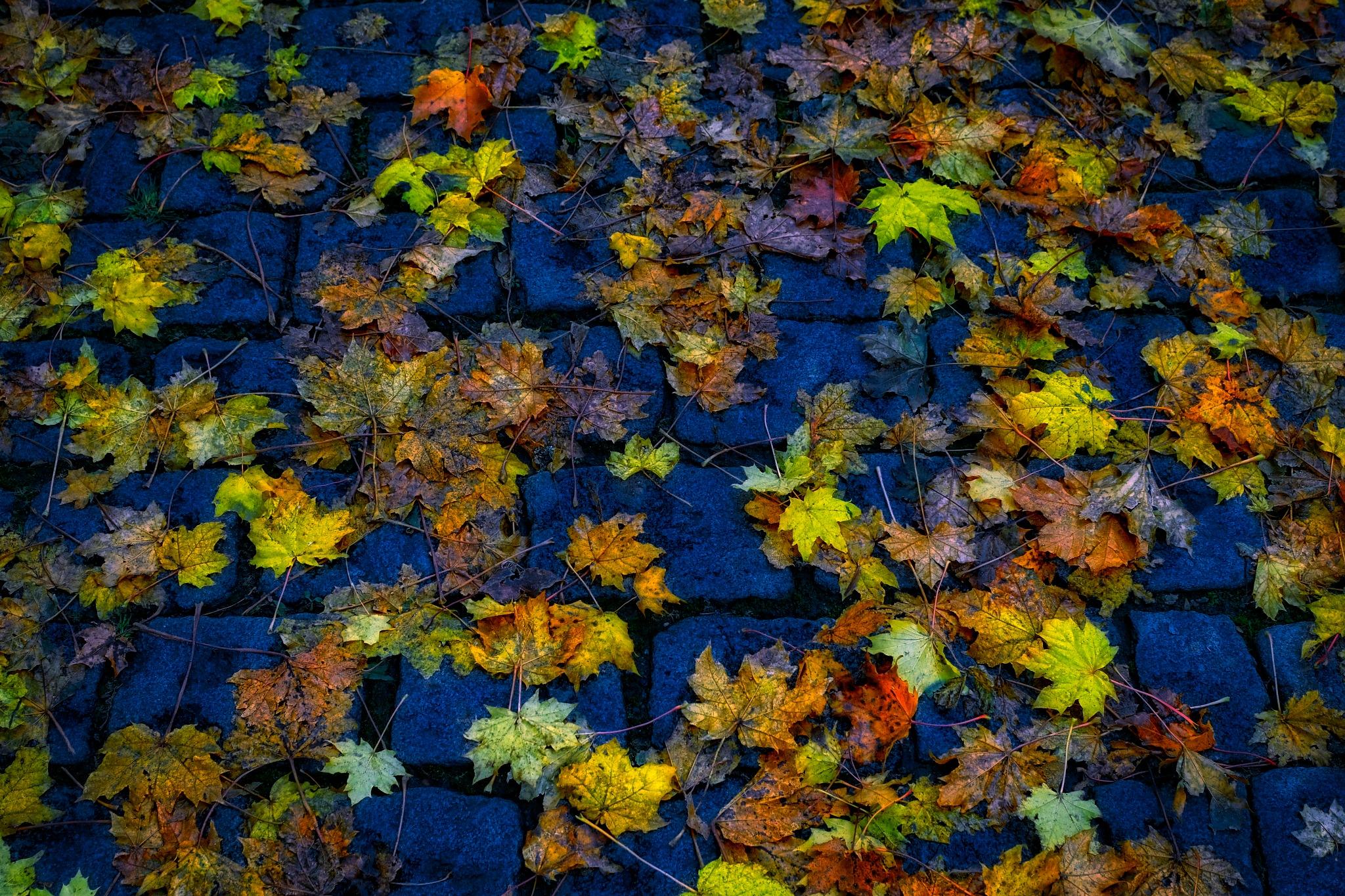 Autumn Leaves  by Goran Jorganovich