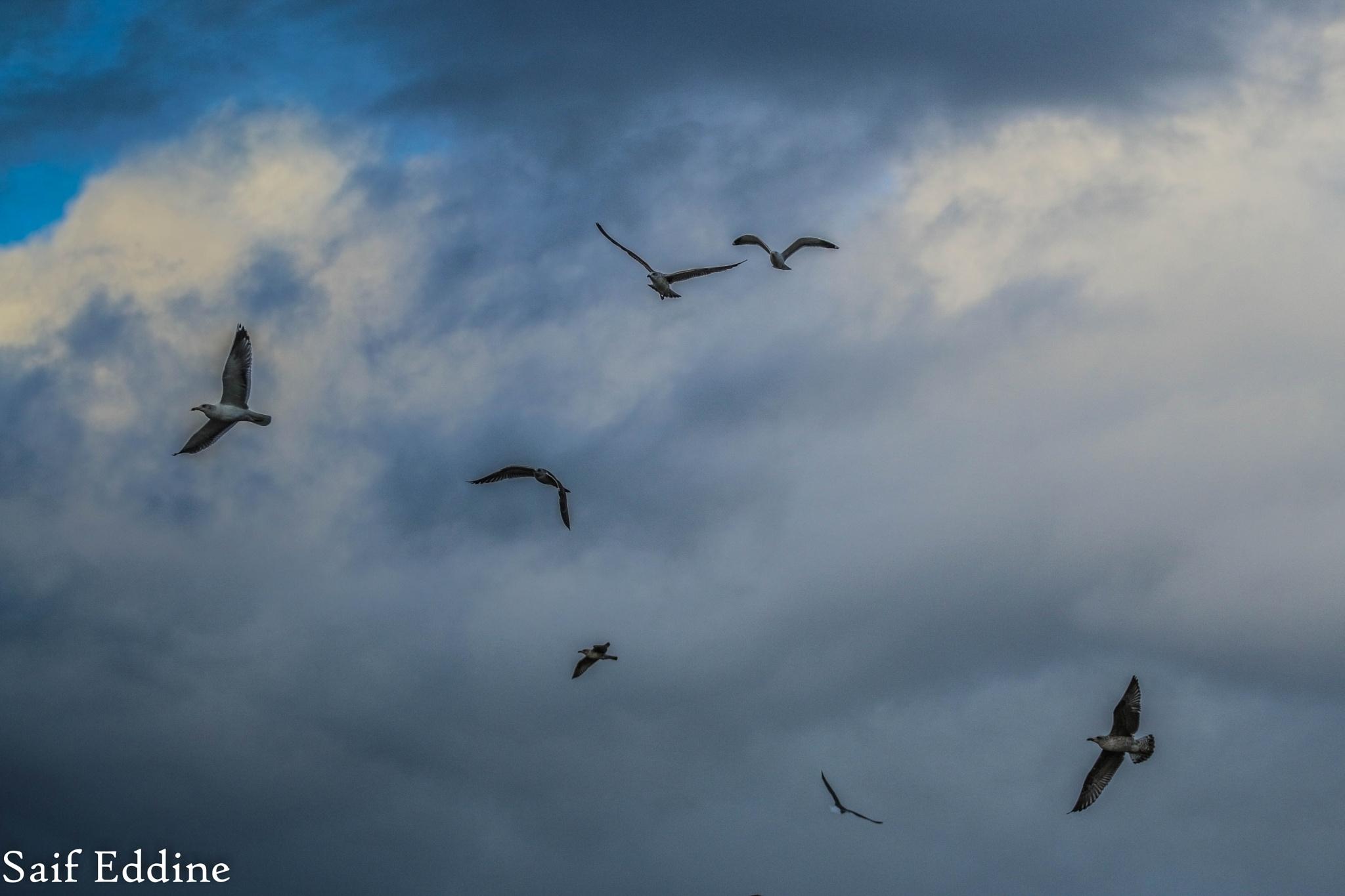 Birds by Saif Eddin