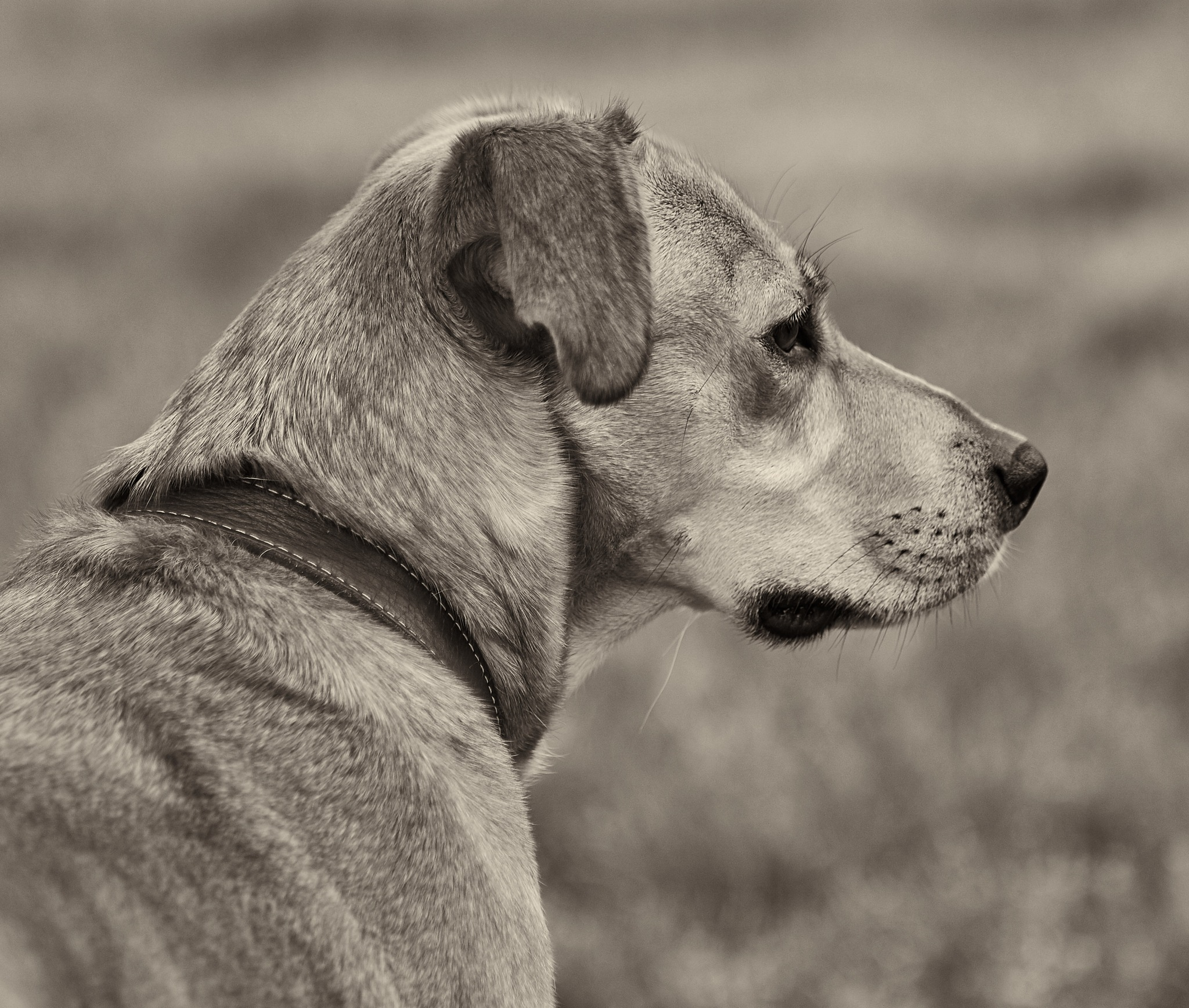 Mabel in Sepia by Holly Jennings