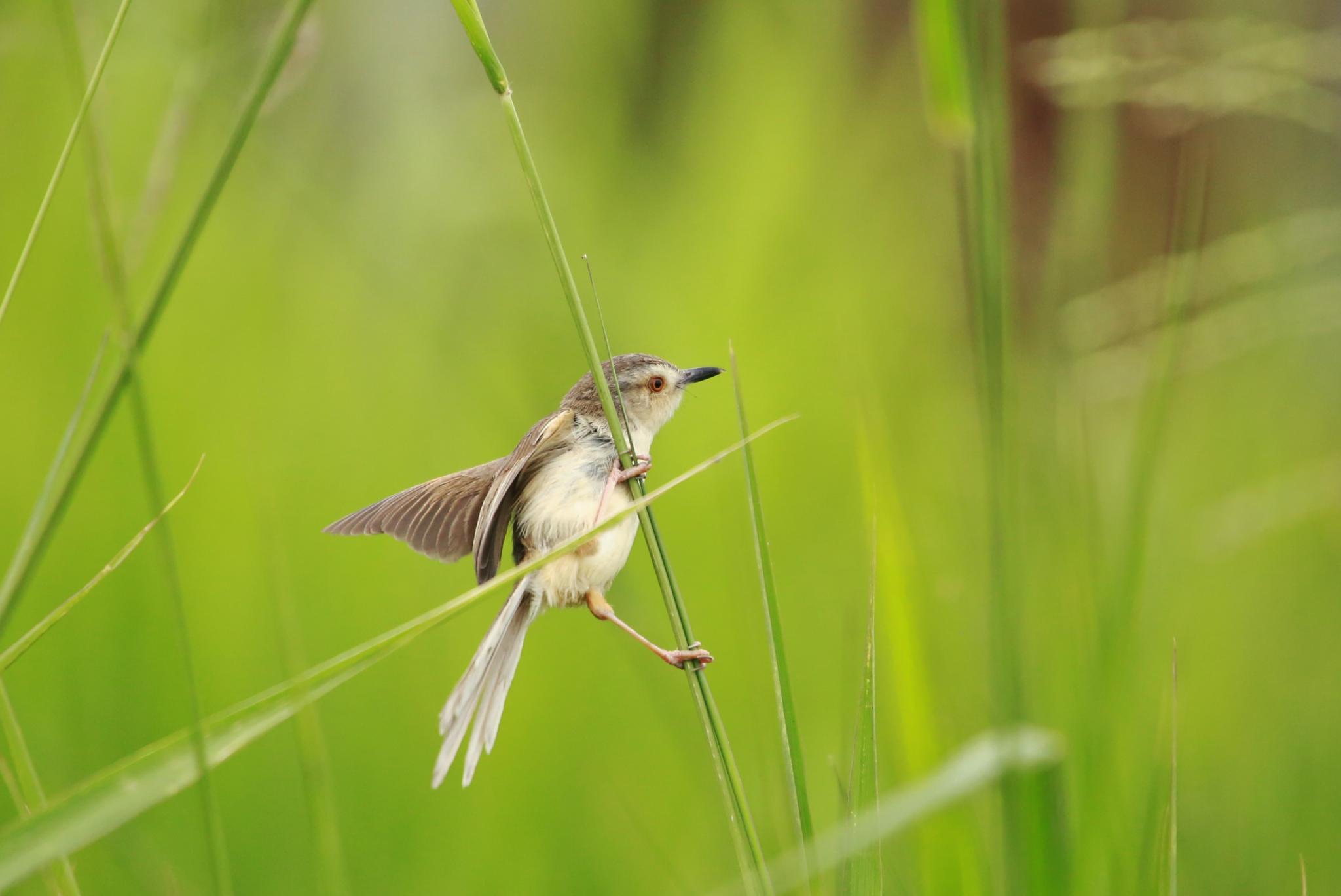 The landing bird. by samip75