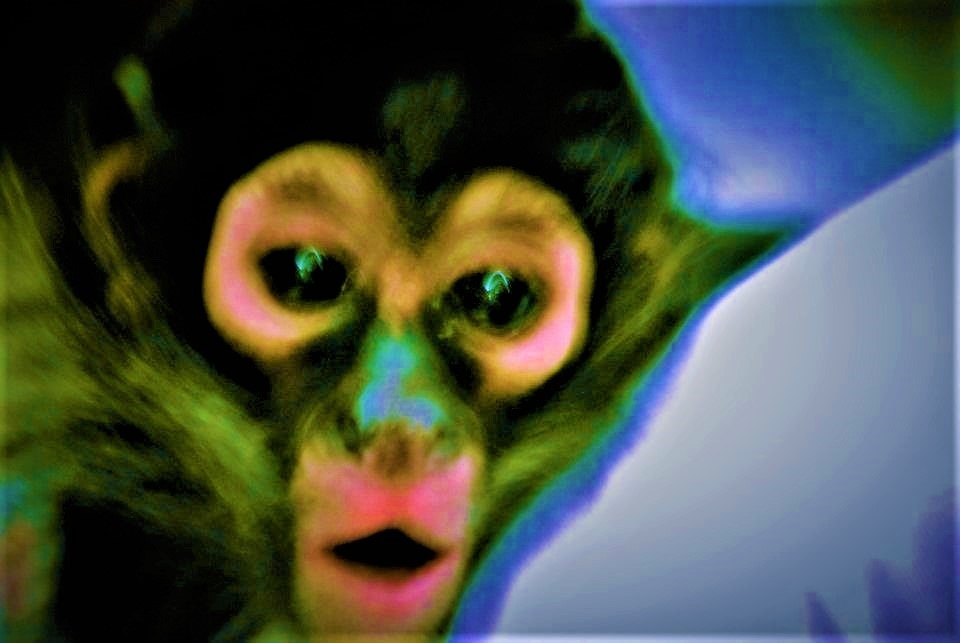 Monkey on the Shouder by RichardJTreitner