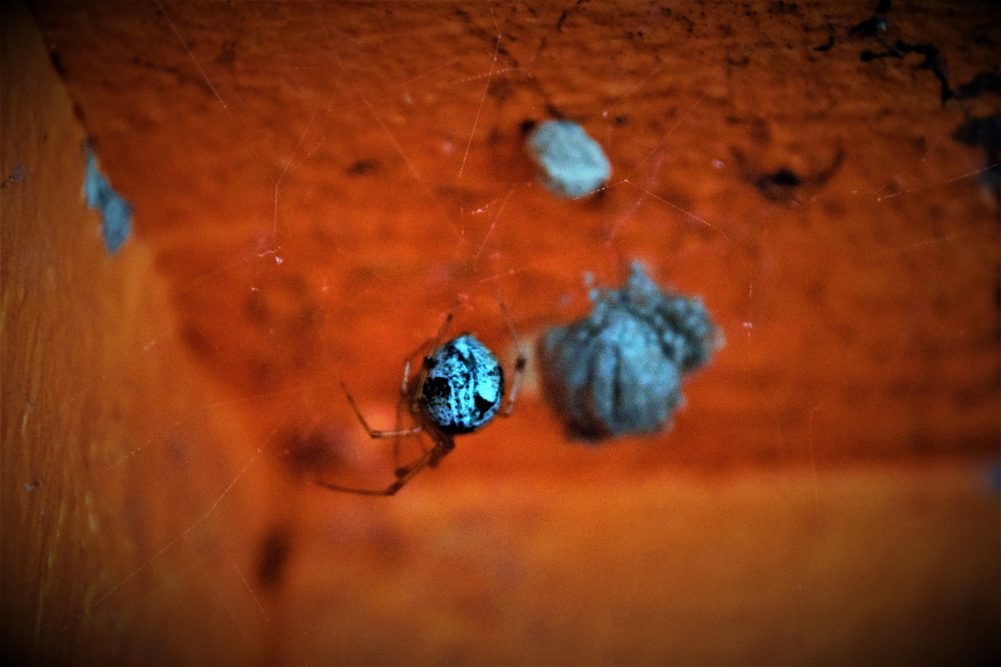 An Ornate Spider Momma With Her Brood In Waiting by RichardJTreitner