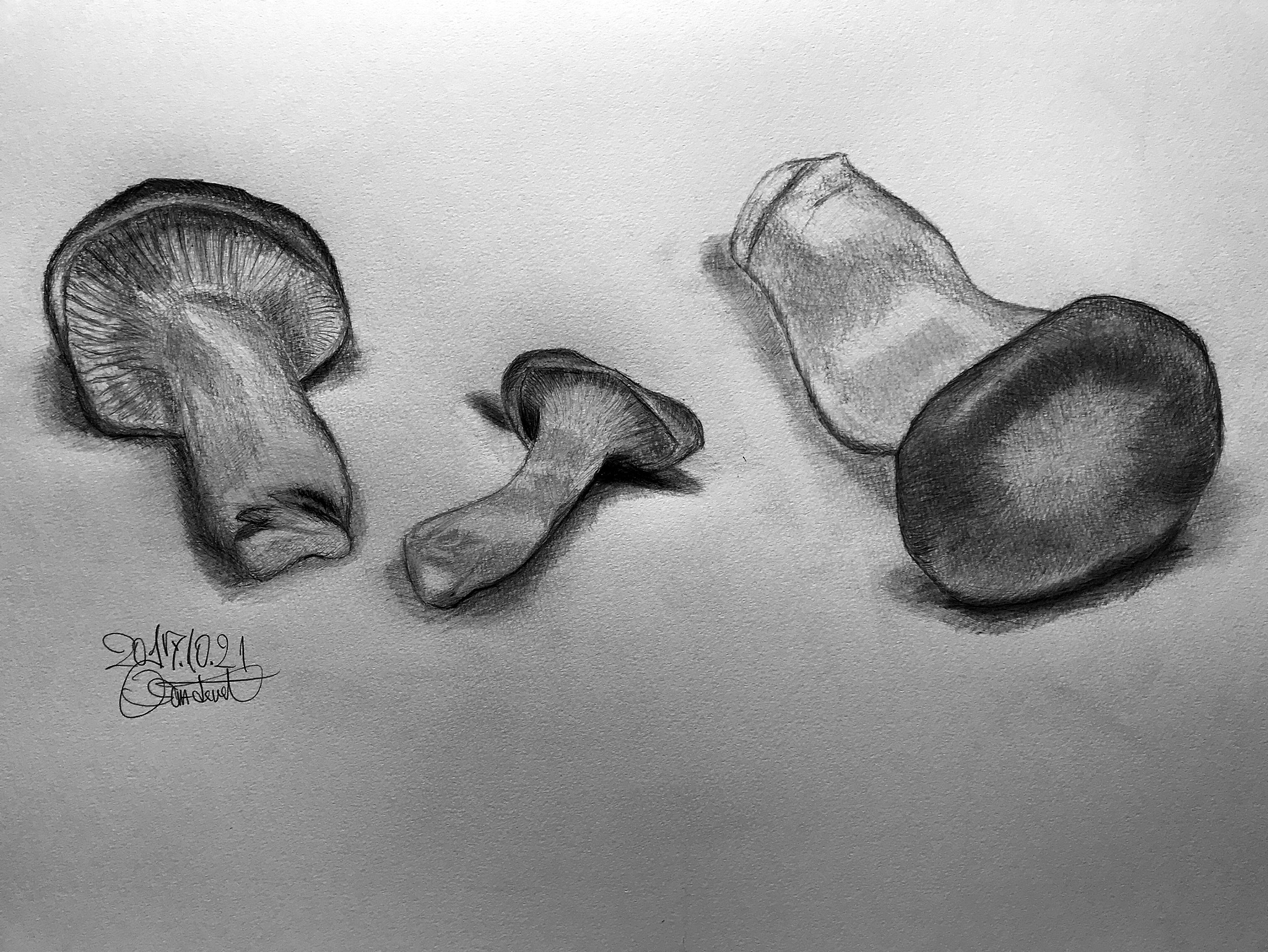 king trumpet mushroom by OSAMU HIROKAWA