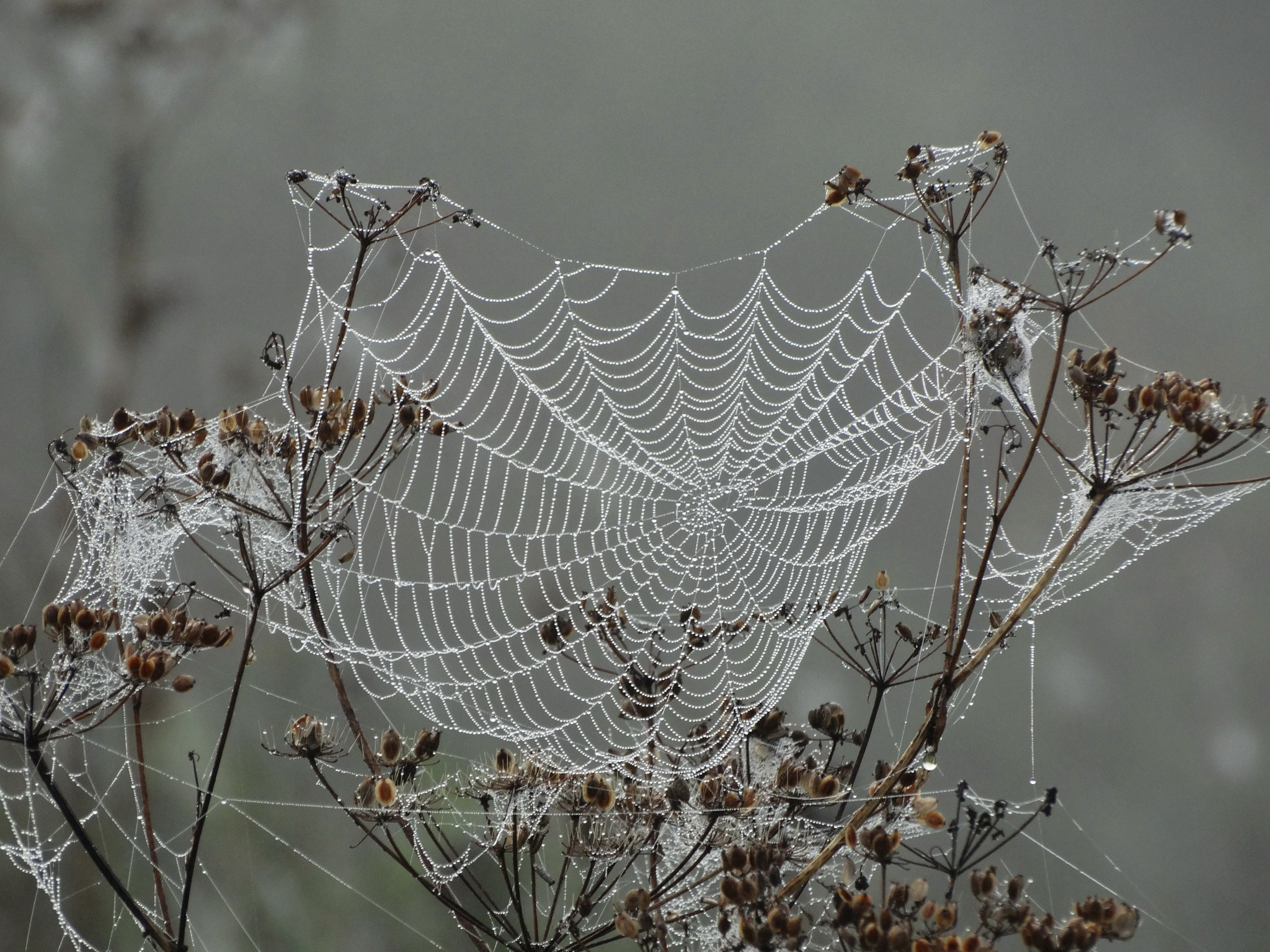 Fog and lace by Ivars Duntavs