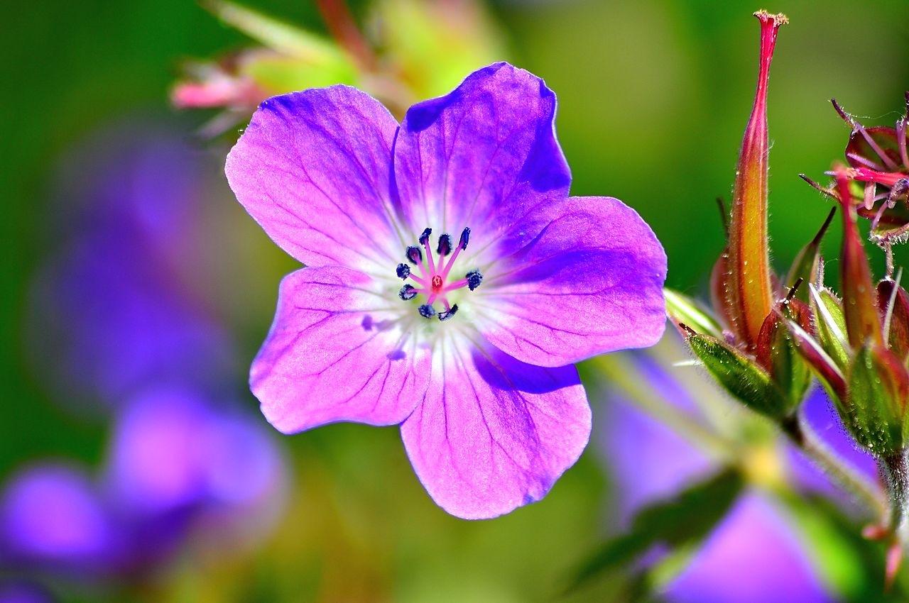 flower closer :) by thorgal7730