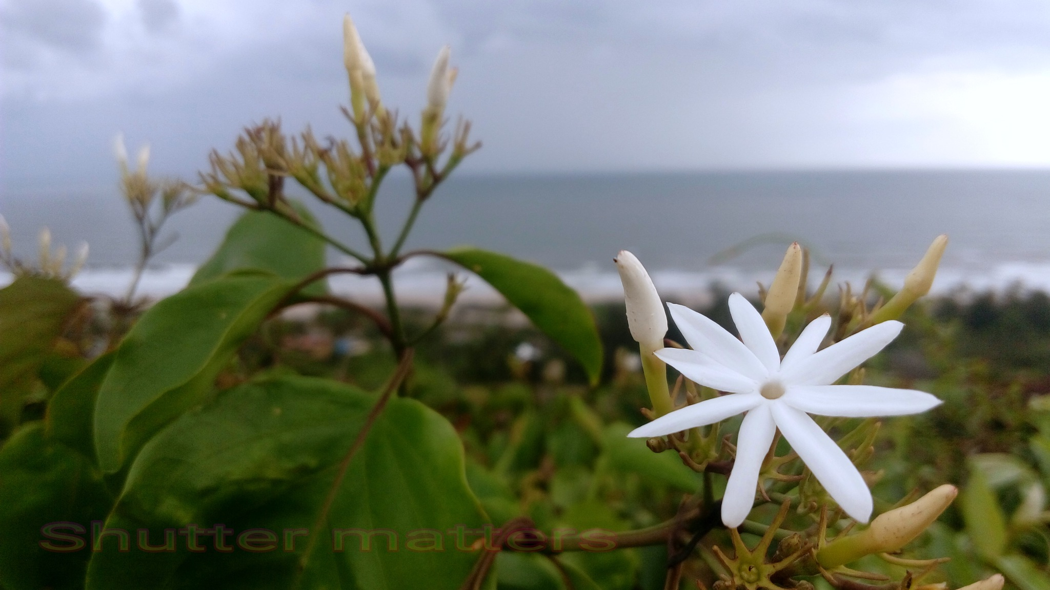 Beauty above the sea level....! by Mahesh Vaingankar