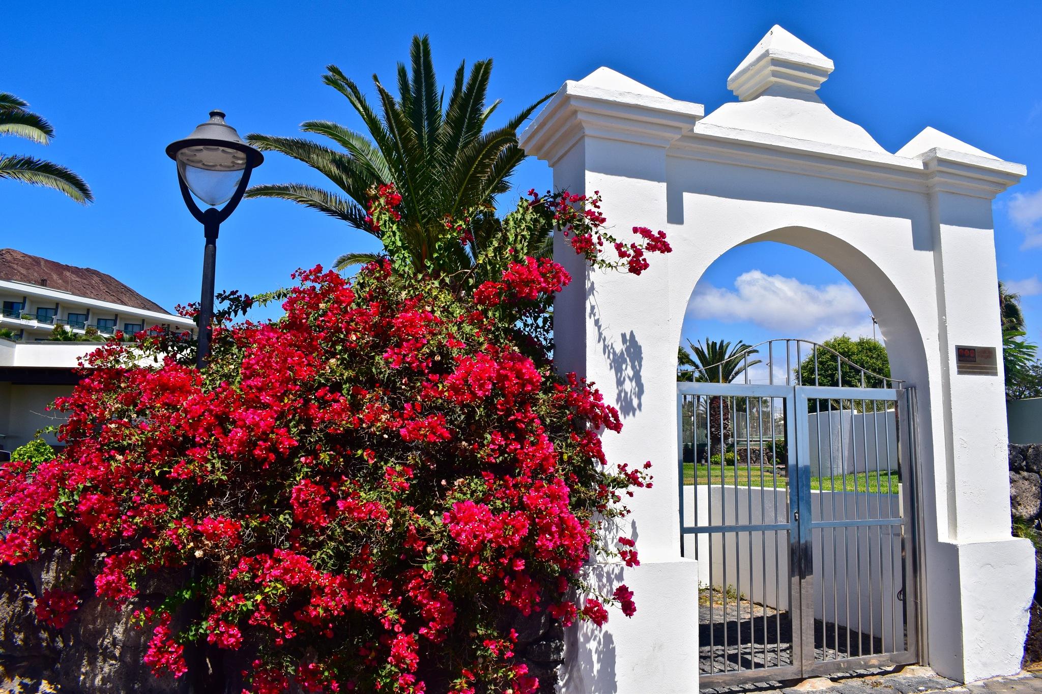 Entrance by Dejan&Milica