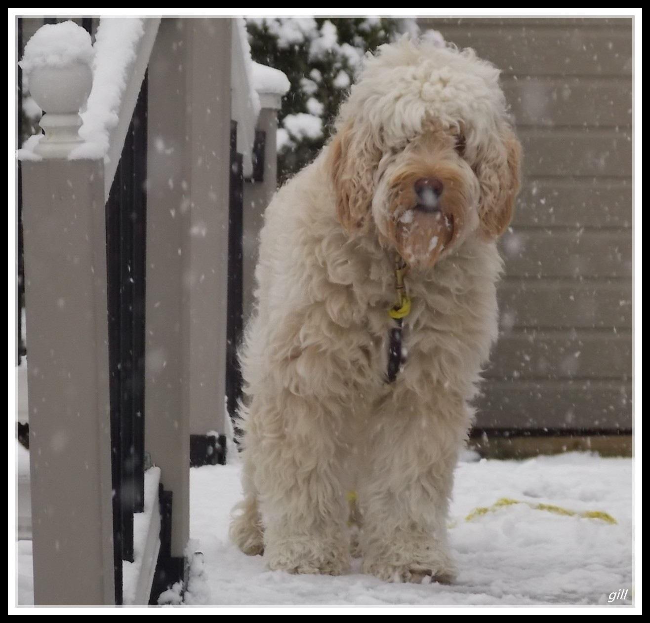 Ozzie sous la neige ! by gilles