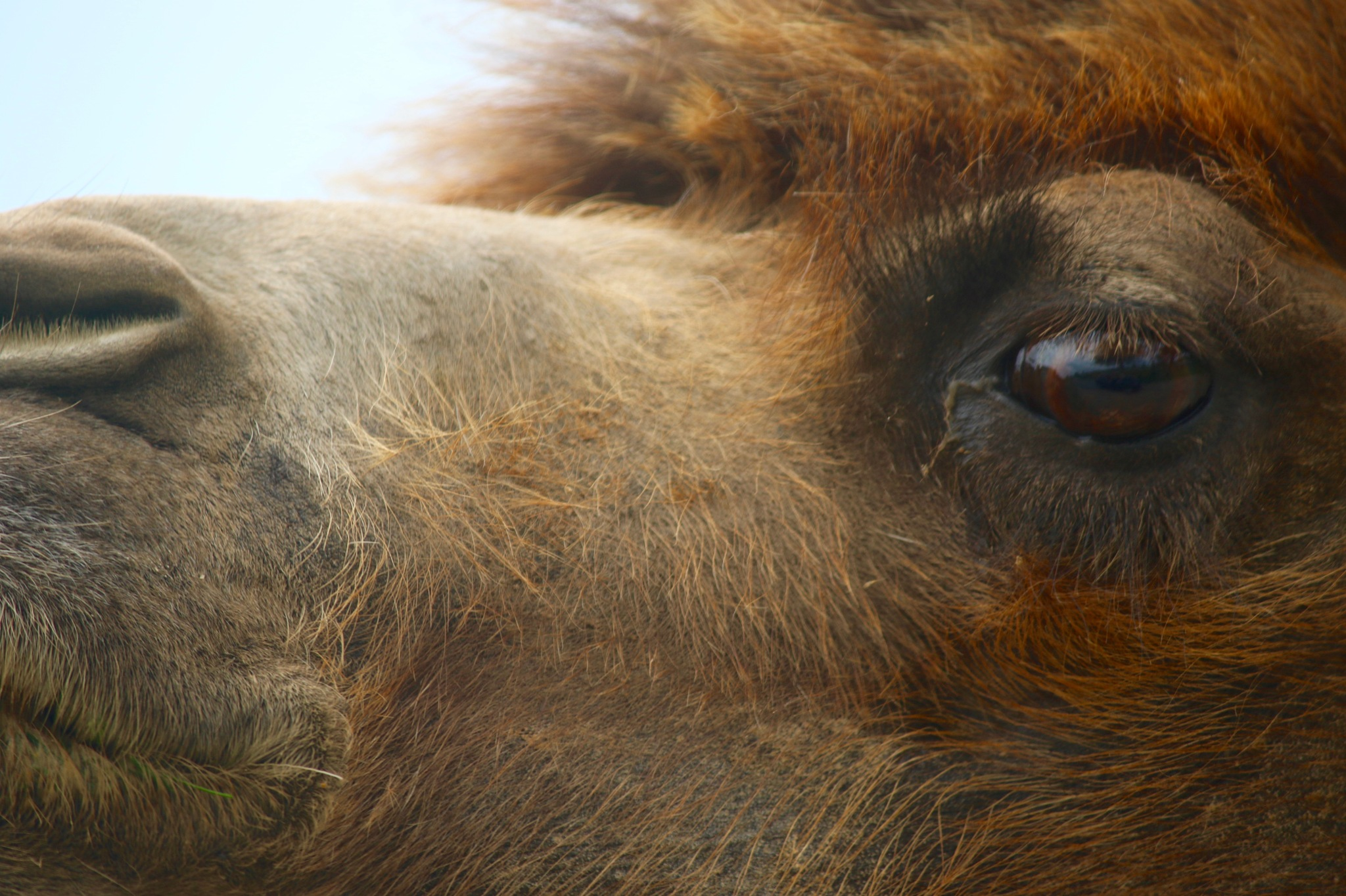 The Eye Of A Camel by PaulWhiteman