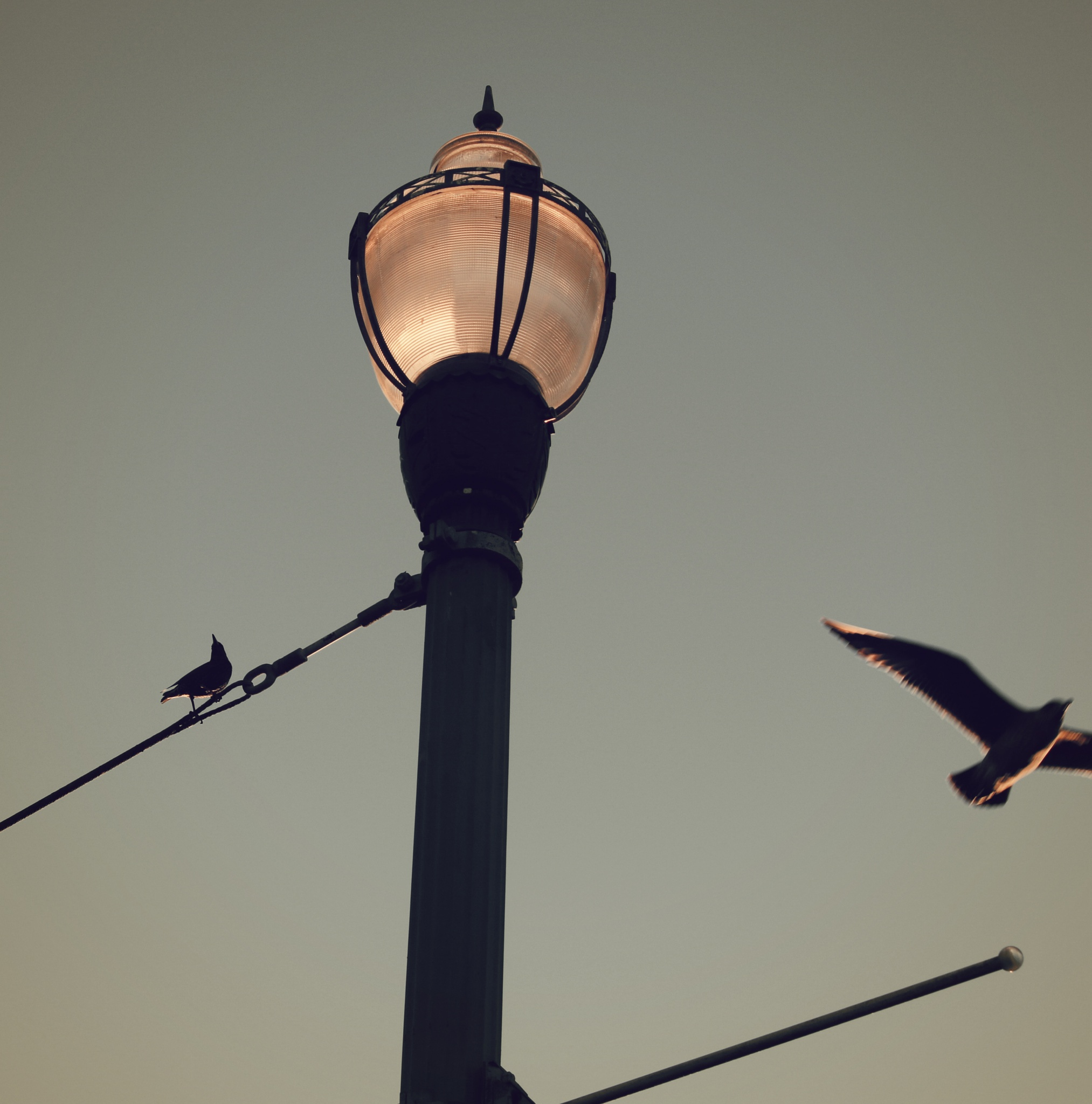 Two Birds and a Light by PaulWhiteman