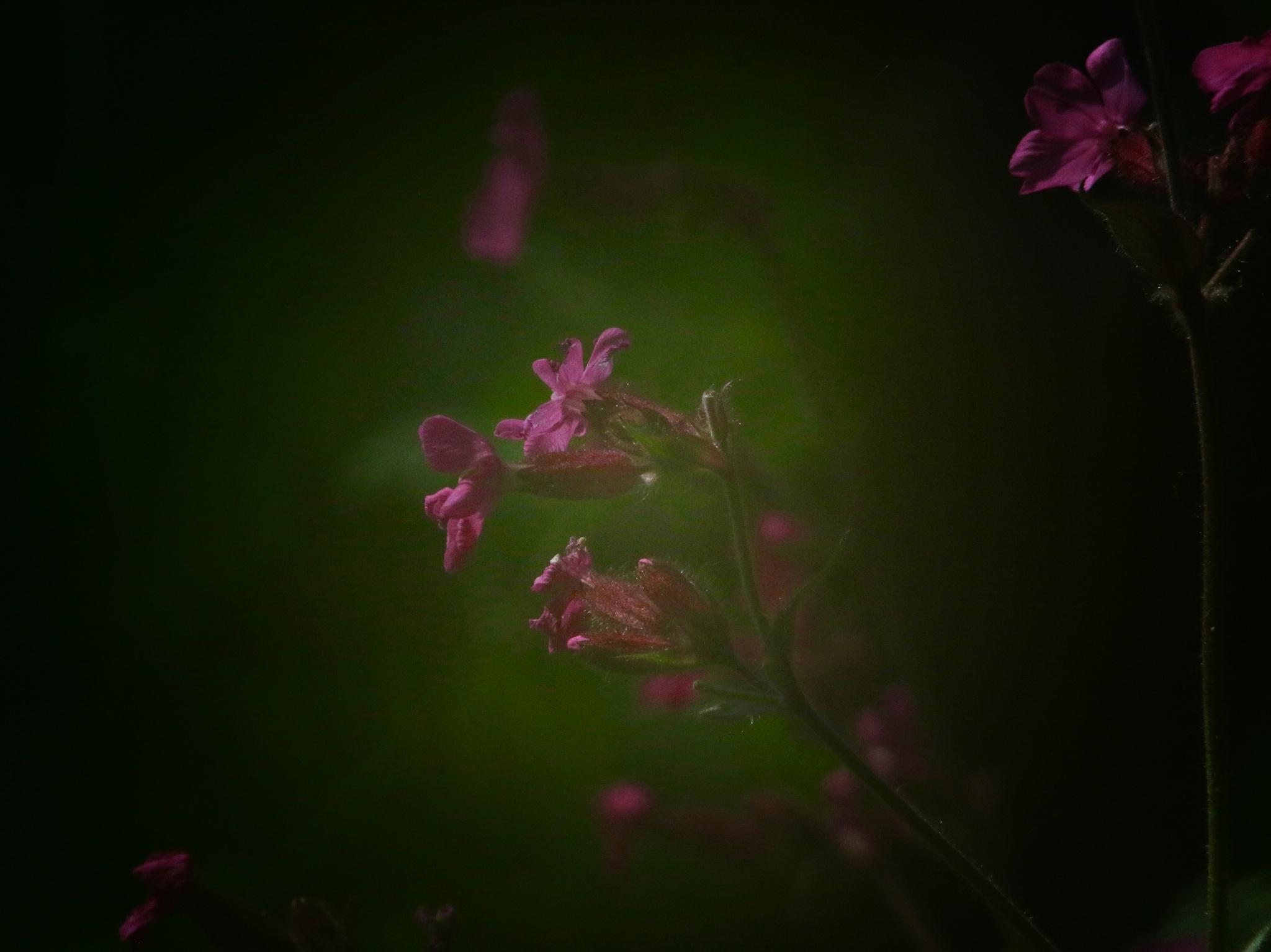 Purple Haze by PaulWhiteman