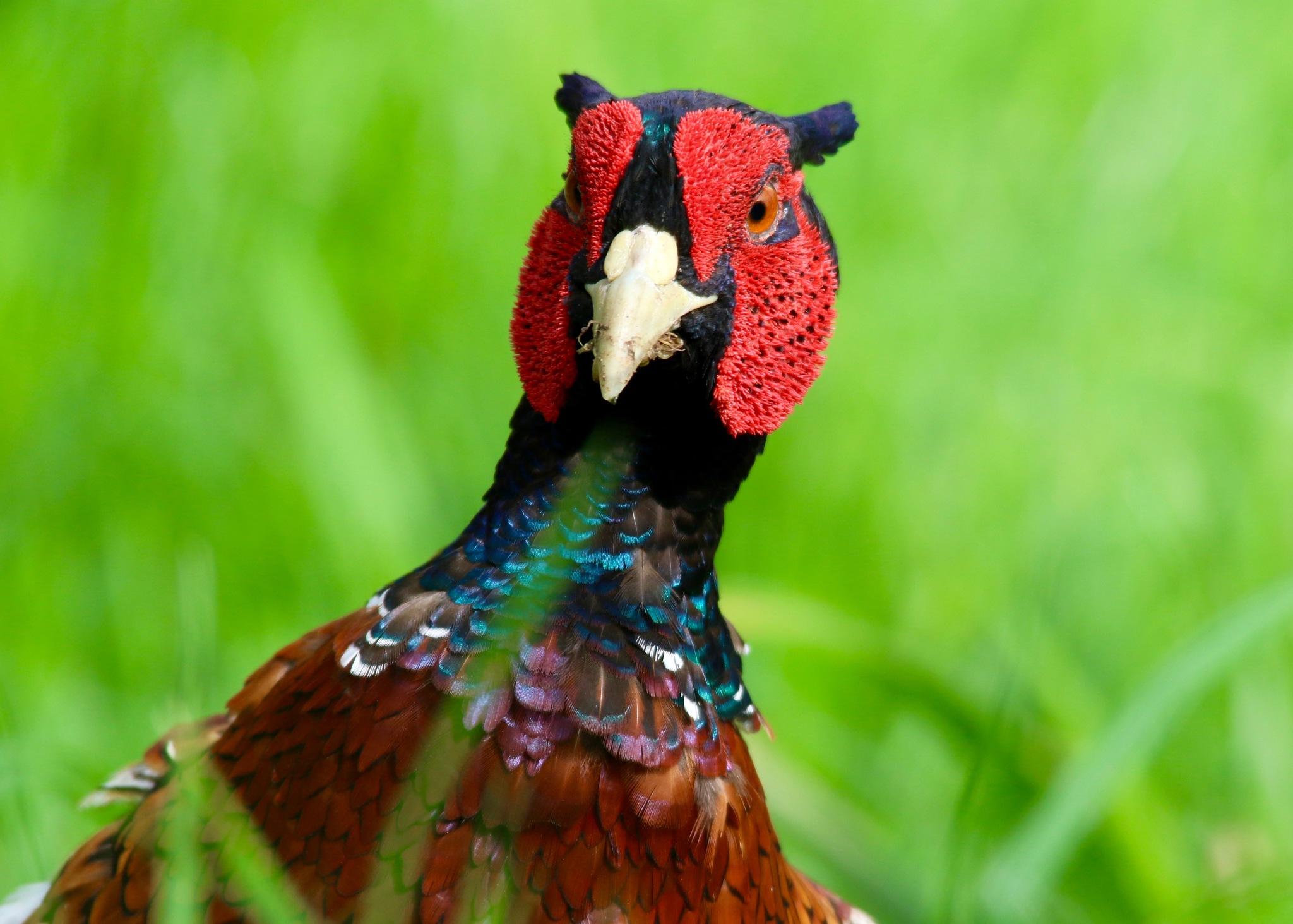 Bird With Attitude by PaulWhiteman