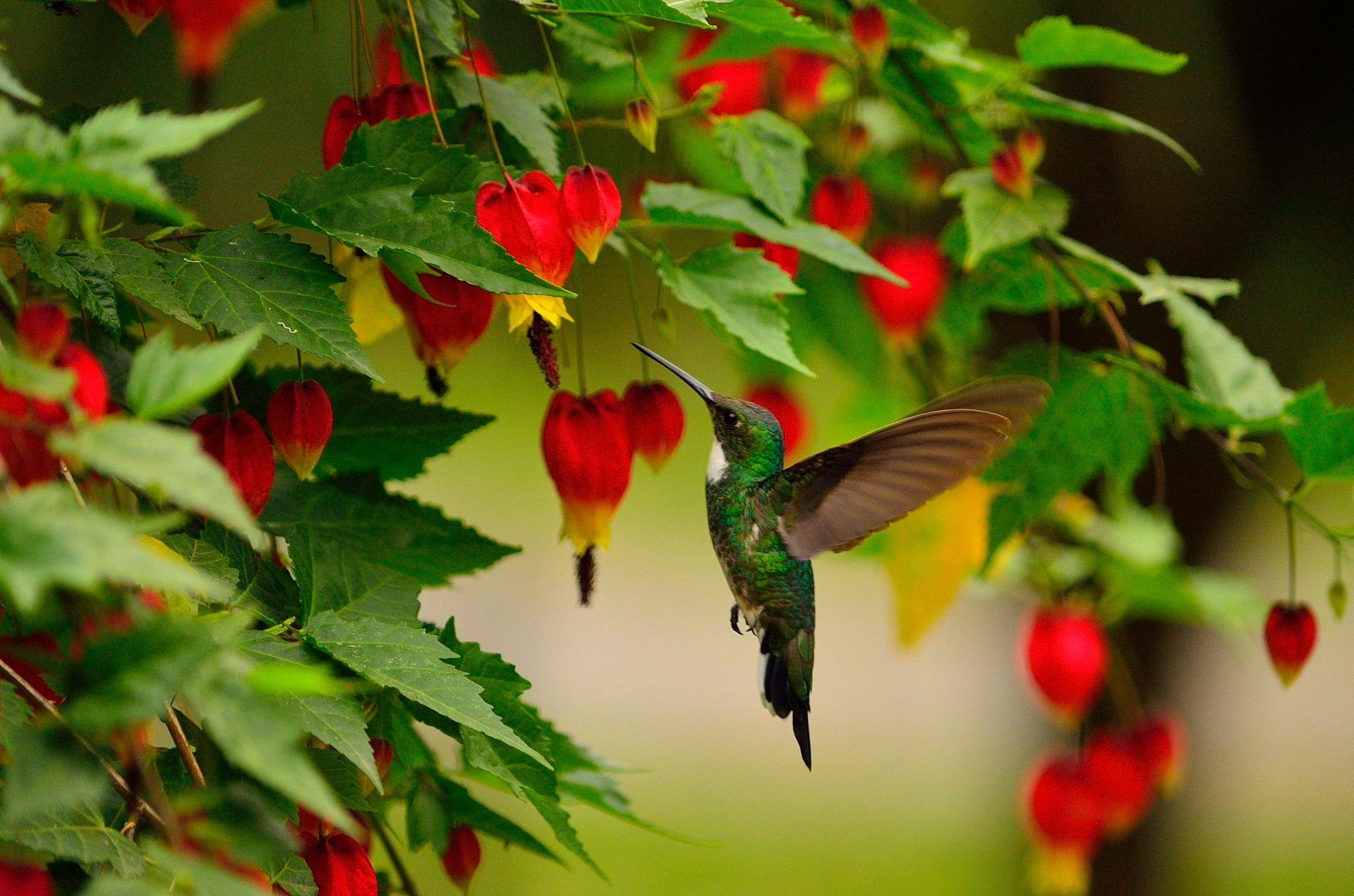 Colibri  by Diego Gallego