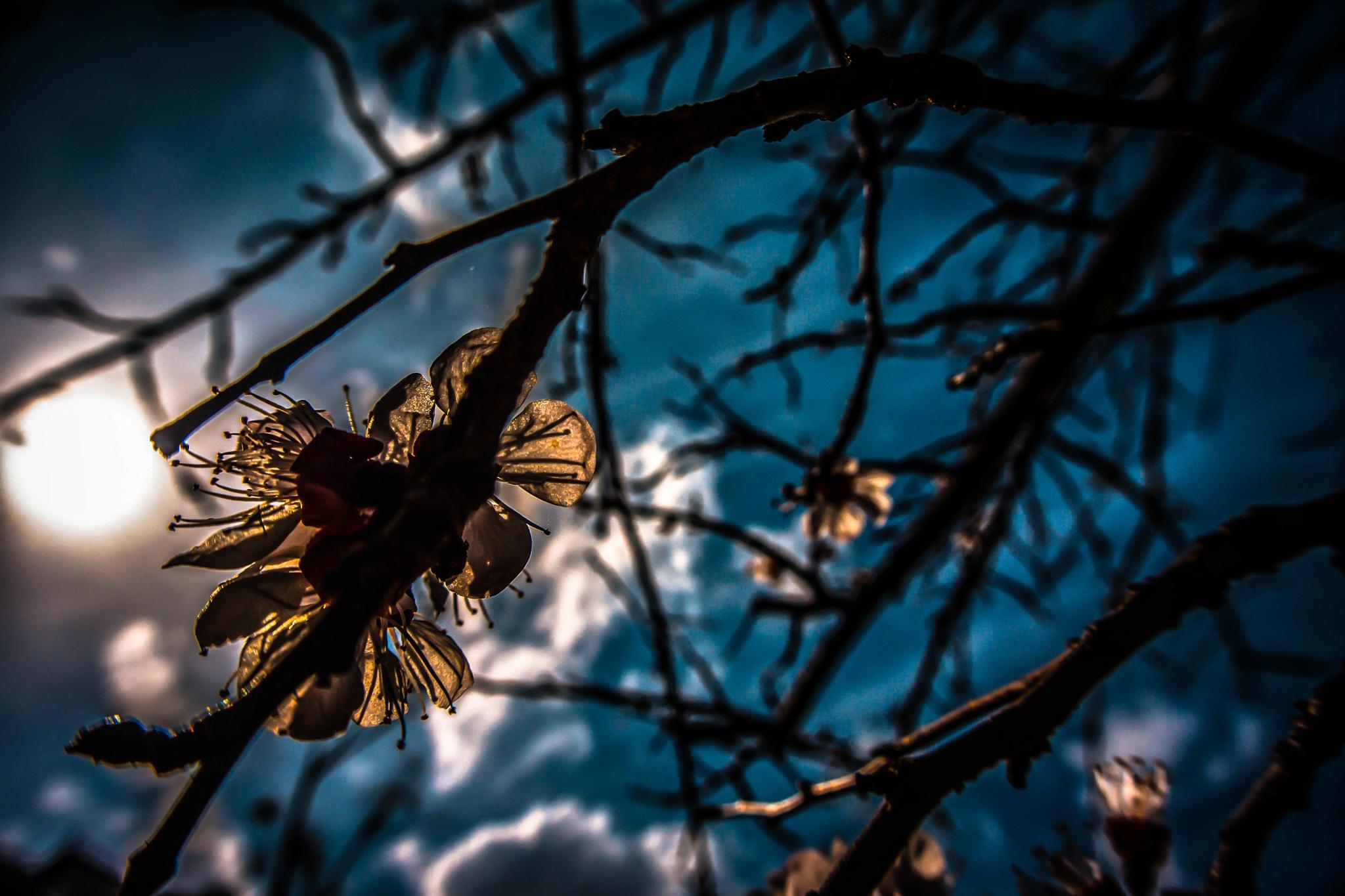 Under the blue sky by Elias Papageorgiou (Drifter Dfr)